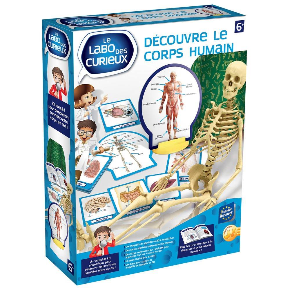 Decouvre Le Corps Humain avec Jeux De Squelette Gratuit