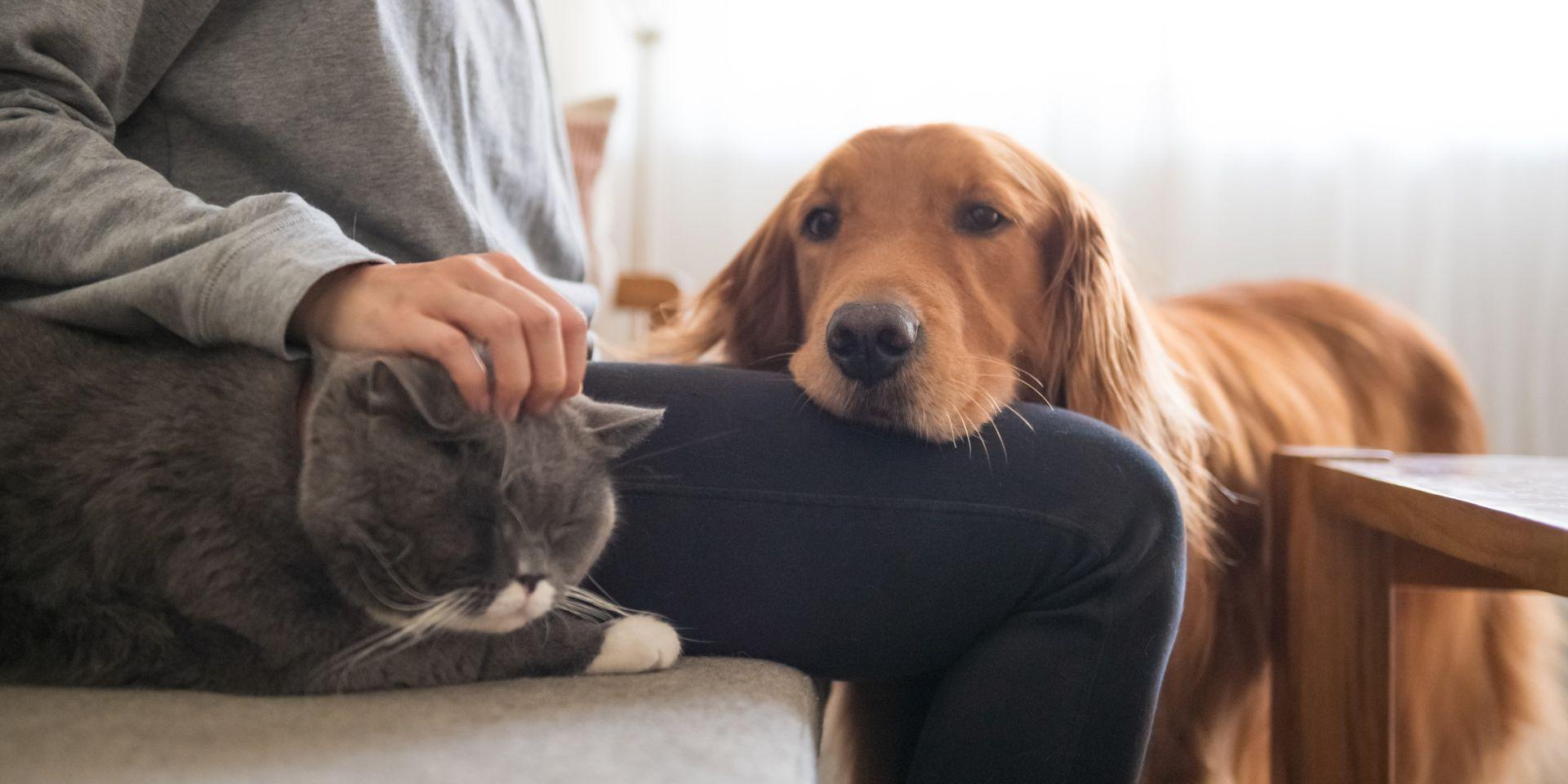 """Des Congés Accordés Pour Les Propriétaires D'animaux: """"une tout Sudoku Animaux À Imprimer"""