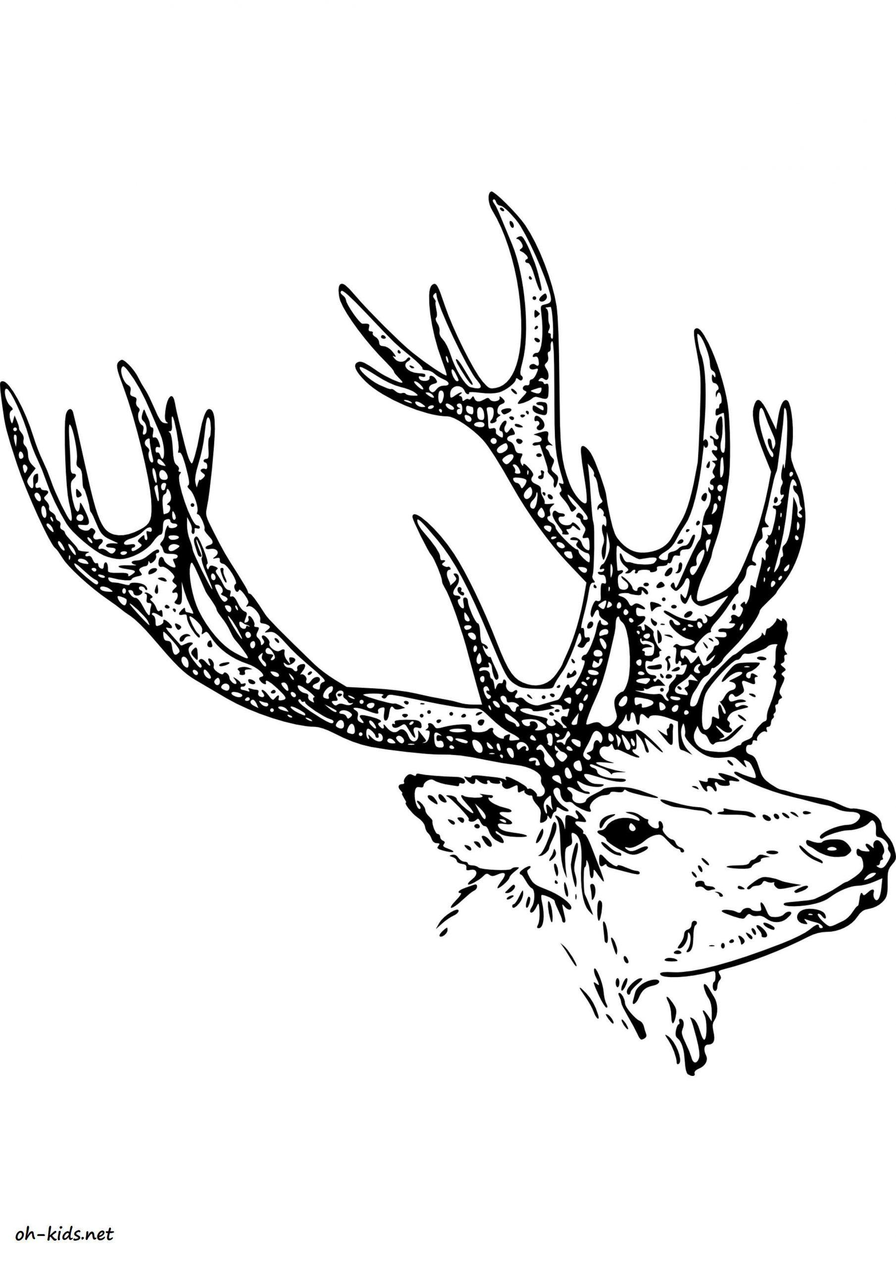 Dessin #1294 - Coloriage Caribou À Imprimer - Oh-Kids dedans Caribou Dessin