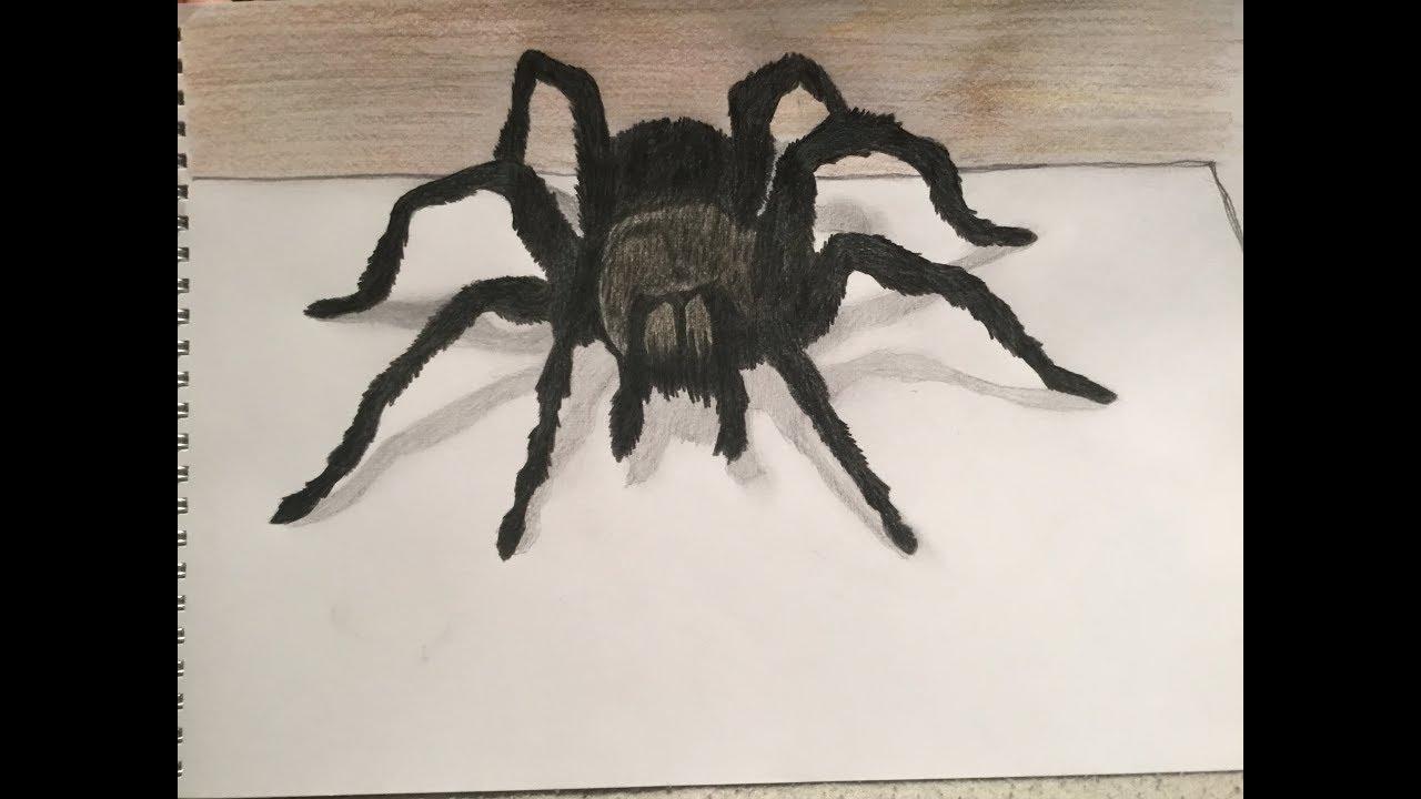Dessin Araignée 3D intérieur Dessiner Une Araignee