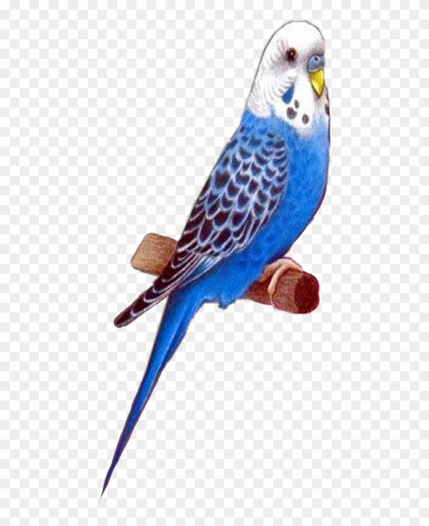 Dessin D Oiseau Exotique Clipart (#3383772) - Pinclipart concernant Dessin De Cage D Oiseau