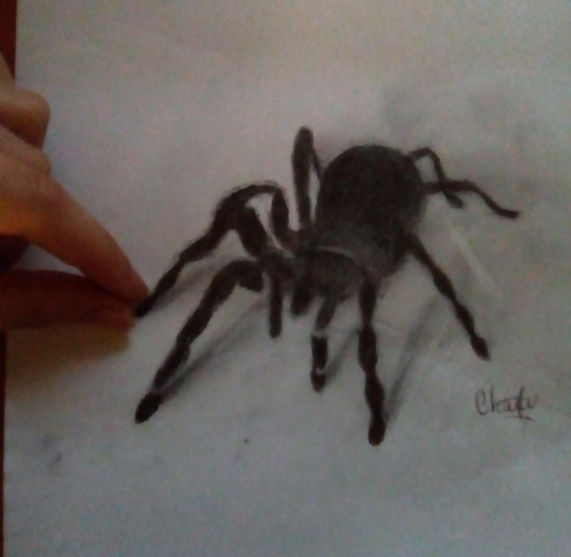 Dessin D'araignée Réaliste ! – Taillez Vos Mines serapportantà Dessiner Une Araignee