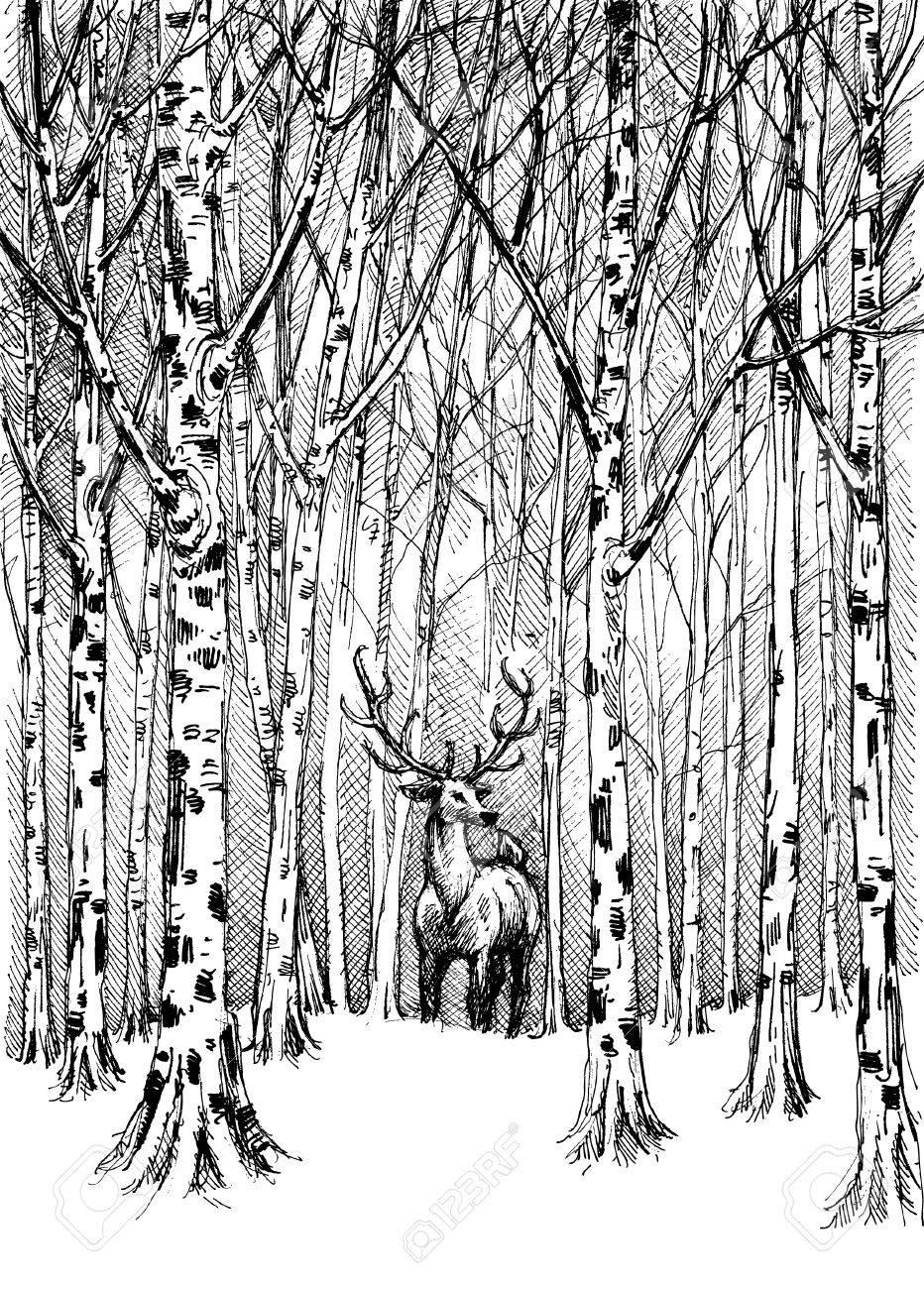 Dessin De Carbone De La Faune. Cerf Dans La Forêt D'hiver avec Dessin De Foret
