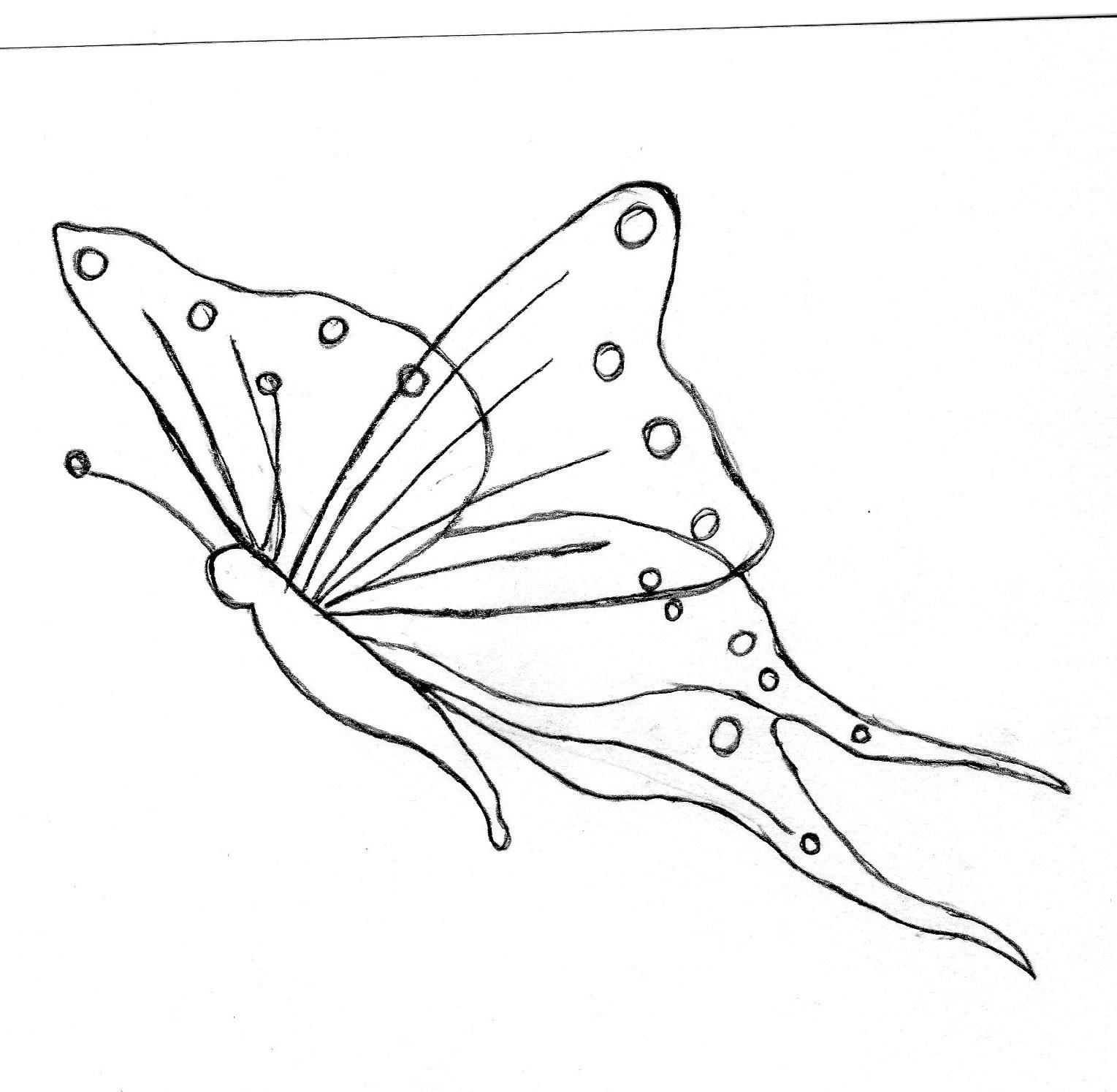 Dessin De Papillon.avec Modéle - Au Fil De L'aude Des Mots intérieur Papillon À Dessiner