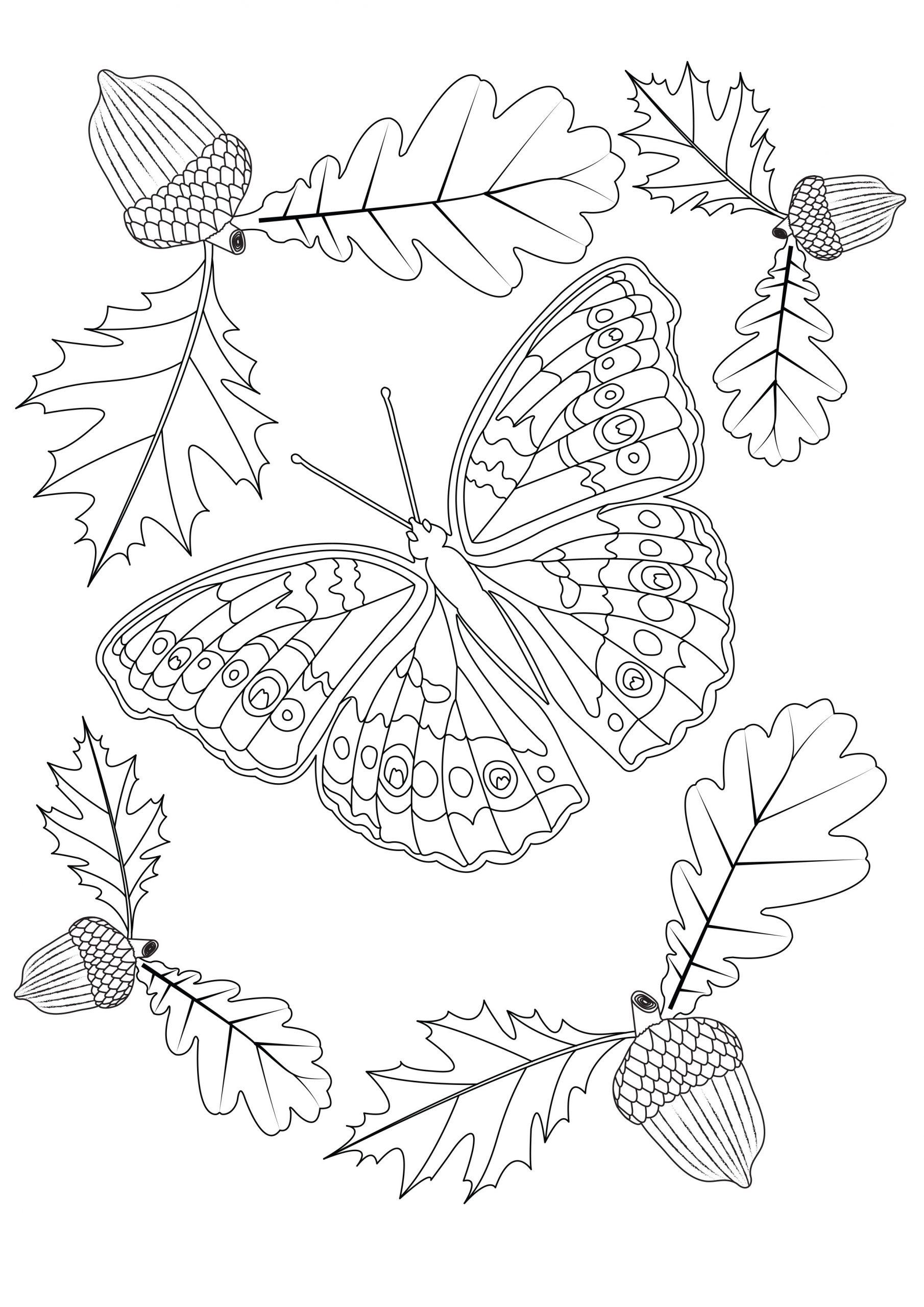 Dessin De Papillons Gratuit À Télécharger Et Colorier concernant Dessin A Imprimer Papillon Gratuit