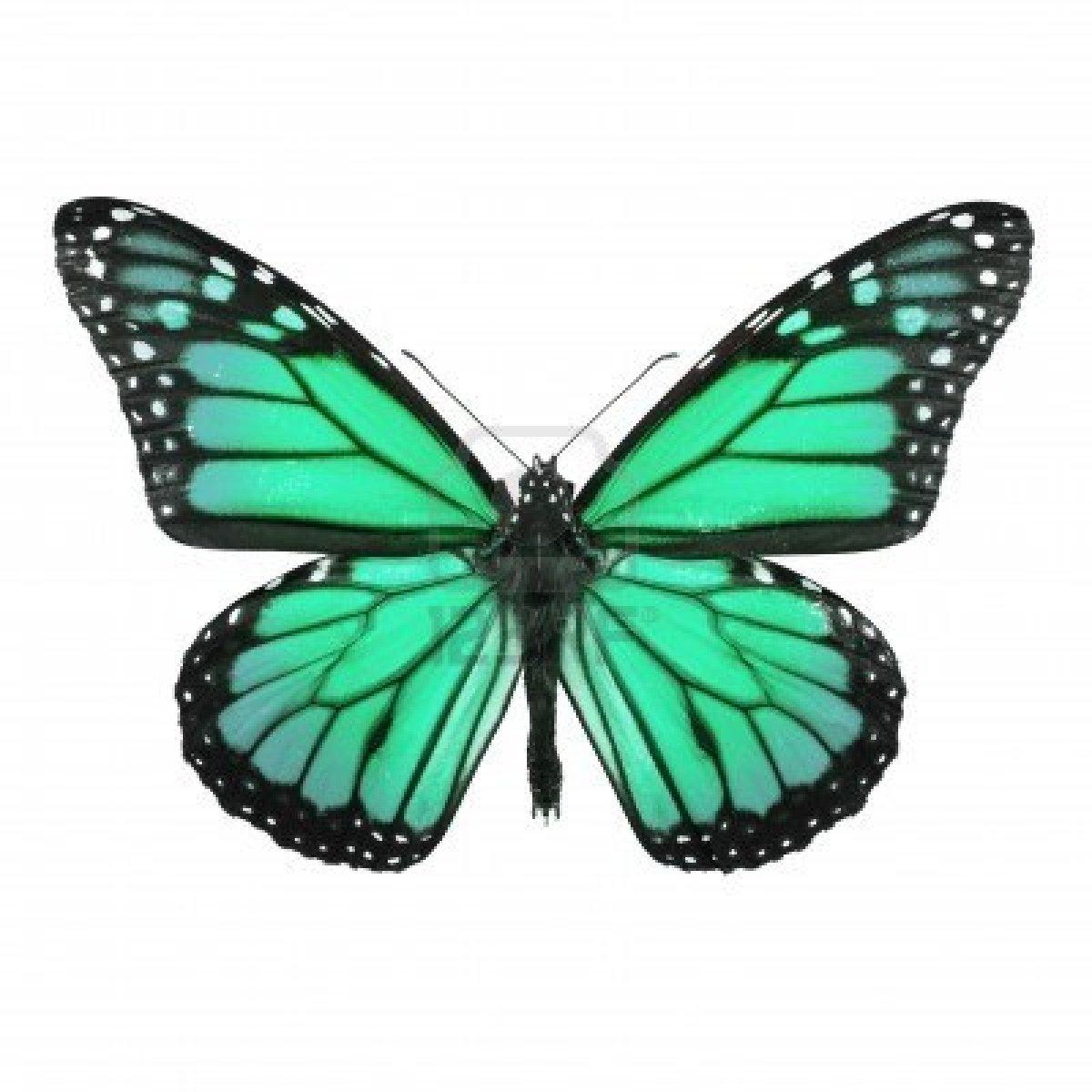 Dessins En Couleurs À Imprimer : Papillon, Numéro : 158552 encequiconcerne Dessin A Imprimer Papillon Gratuit