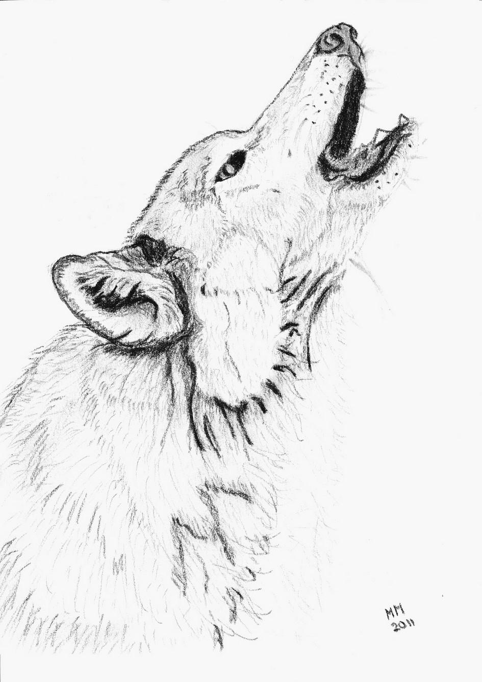 Dessins Gratuits À Colorier - Coloriage Loup À Imprimer intérieur Masque De Loup À Imprimer