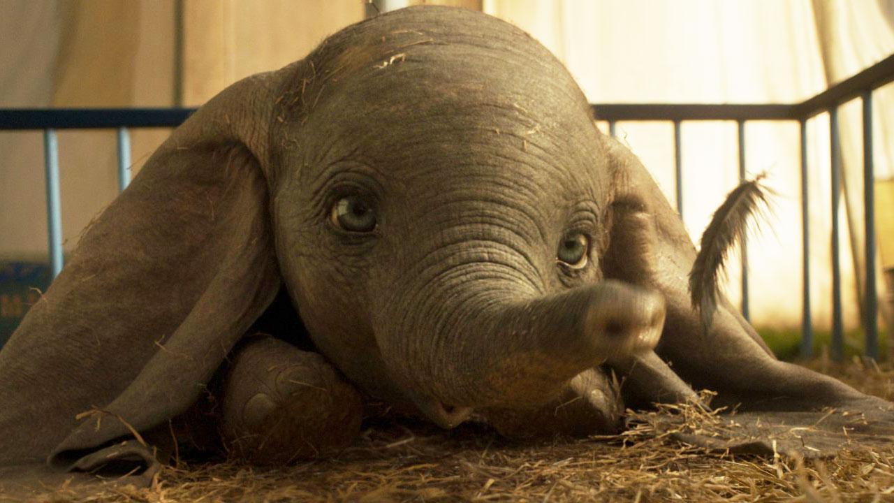 Dumbo : Comment La Version De Tim Burton Différera Du Film encequiconcerne Dessin Dumbo