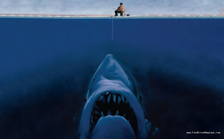 Épinglé Par Steph Chris Sur Wallpaper | Fond Ecran Drole tout Jeux Gratuit Requin Blanc