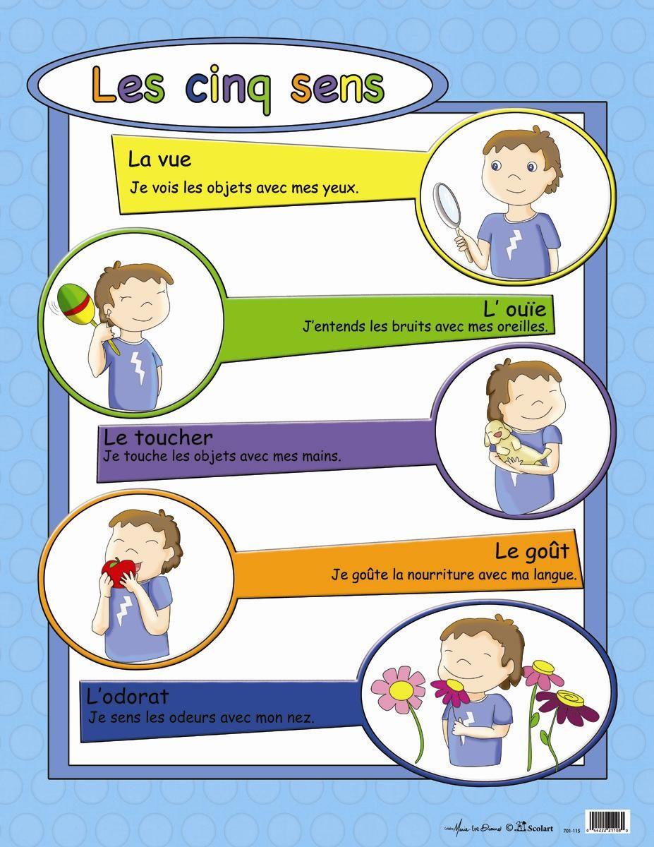 Épinglé Sur Alyssa serapportantà Les 5 Sens Activités Maternelle