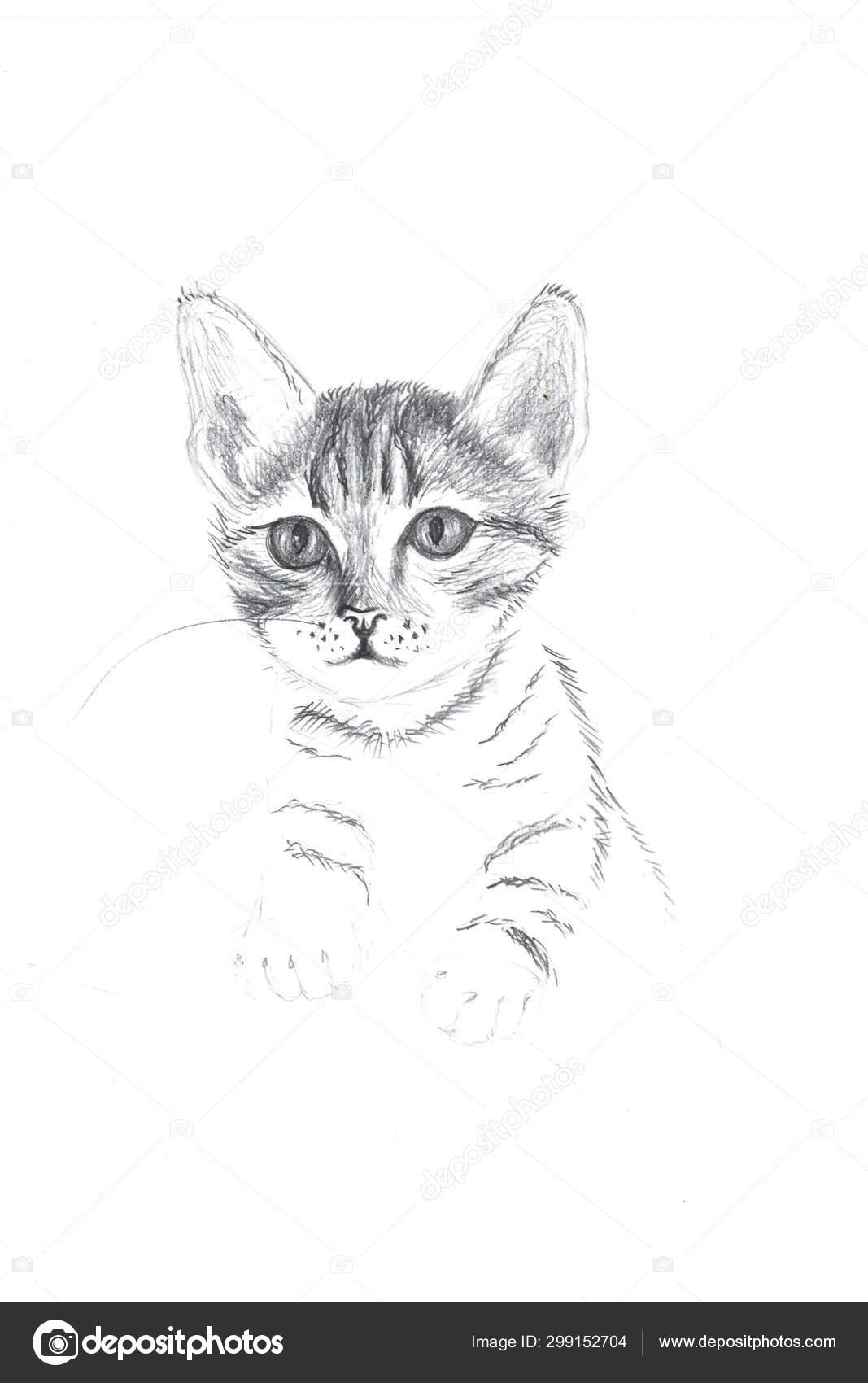 Esquisse Inachevée Chat Faite Avec Crayon Dessin Main Dans tout Minou Dessin