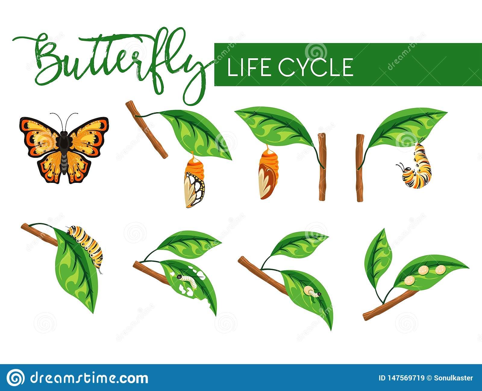 Étapes D'isolement Par Transformation De Larve De Cycle De intérieur Cycle De Vie D Une Chenille