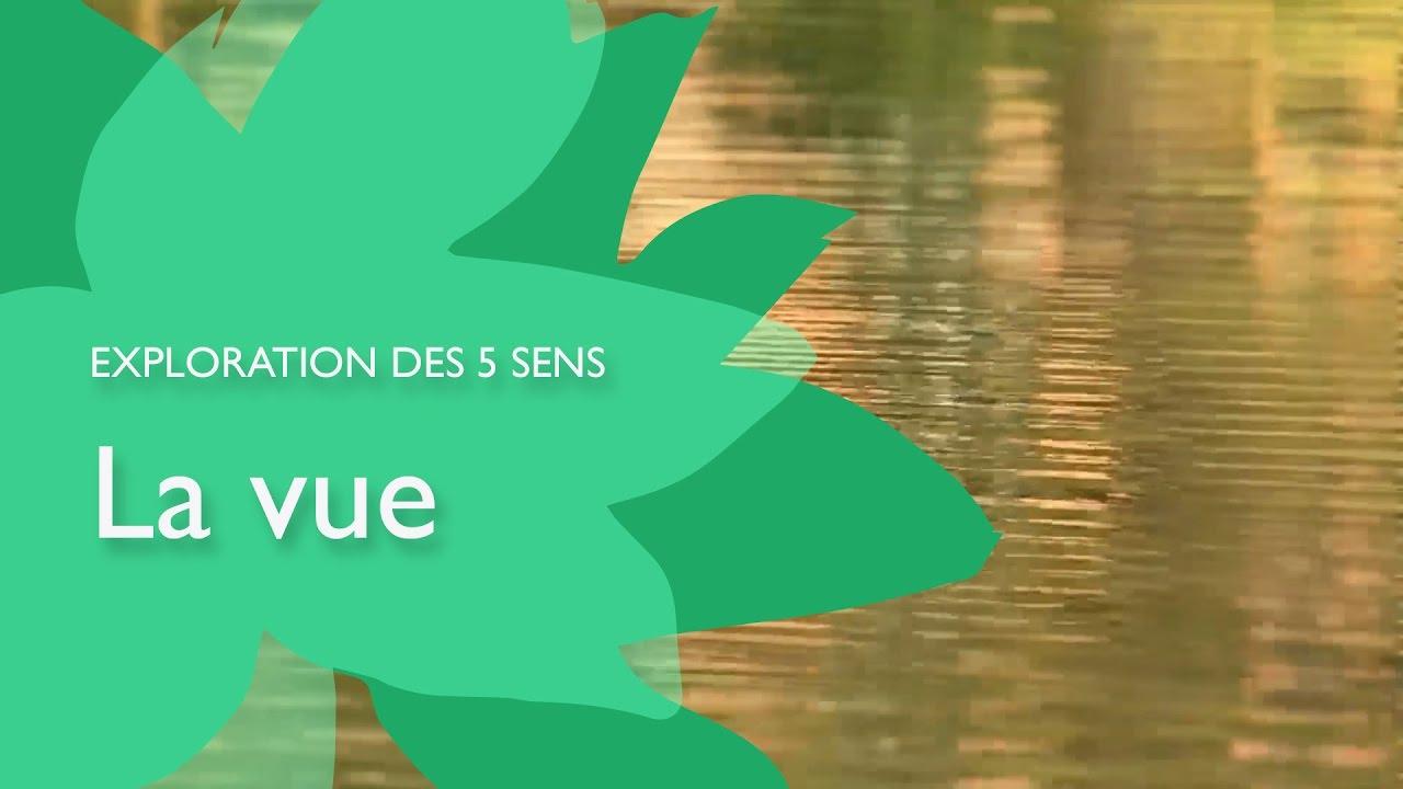 Exploration Des 5 Sens : La Vue intérieur Les 5 Sens Activités Maternelle