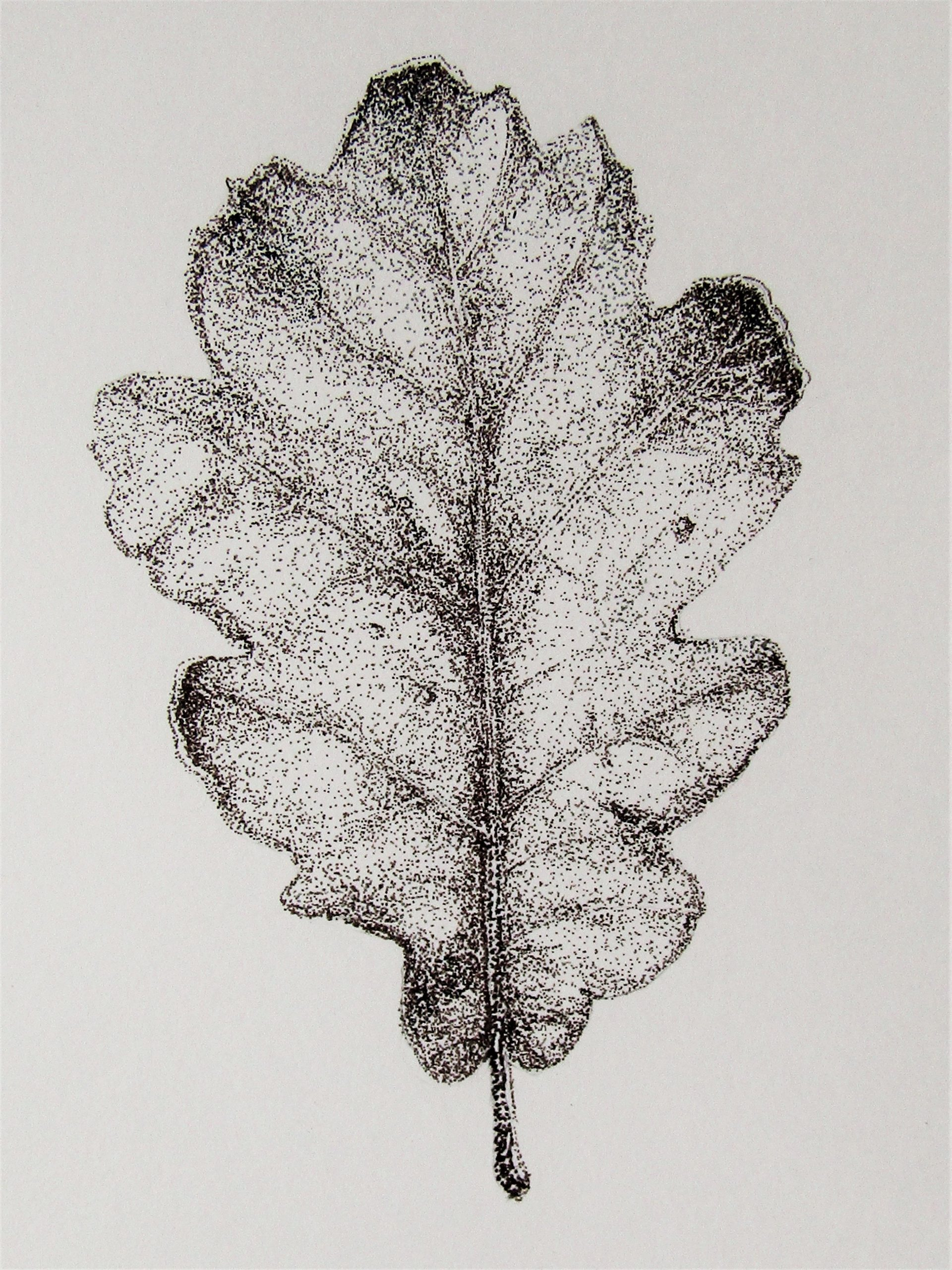 Feuille De Chene/oak Leaf Dessin A L'encre Pointille Ink encequiconcerne Dessin En Pointillé