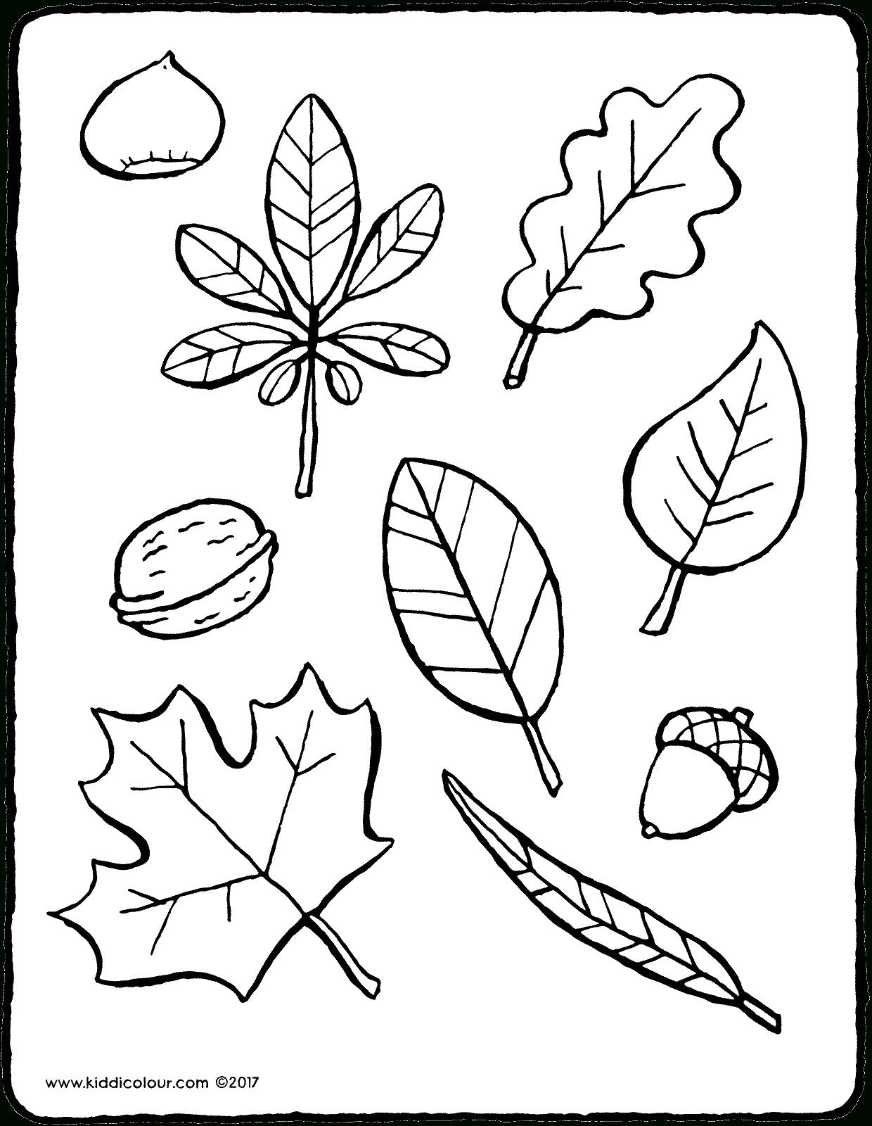Feuilles D'automne - Kiddicoloriage destiné Dessin De Feuille D Arbre À Imprimer