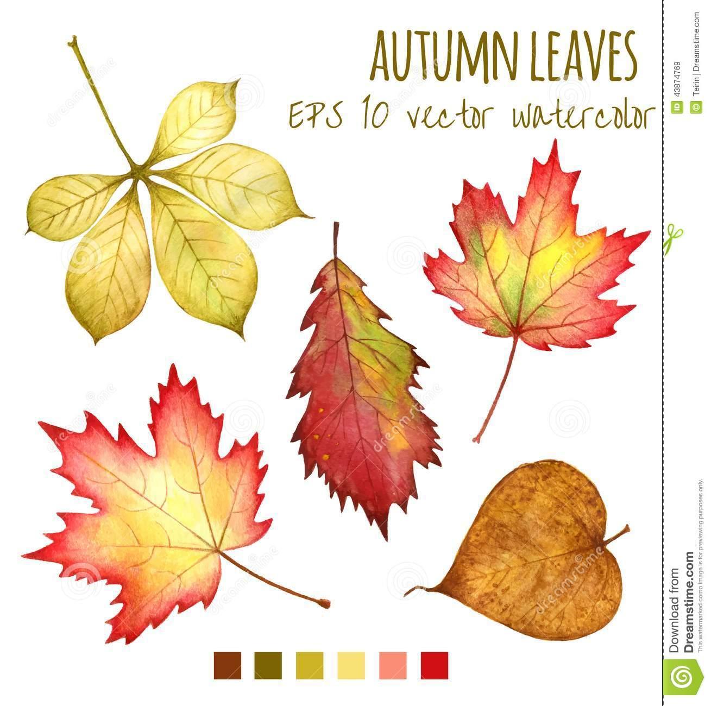 Feuilles D'automne Une Couleur D'eau Sur Un Fond Blanc pour Dessin De Feuille D Automne
