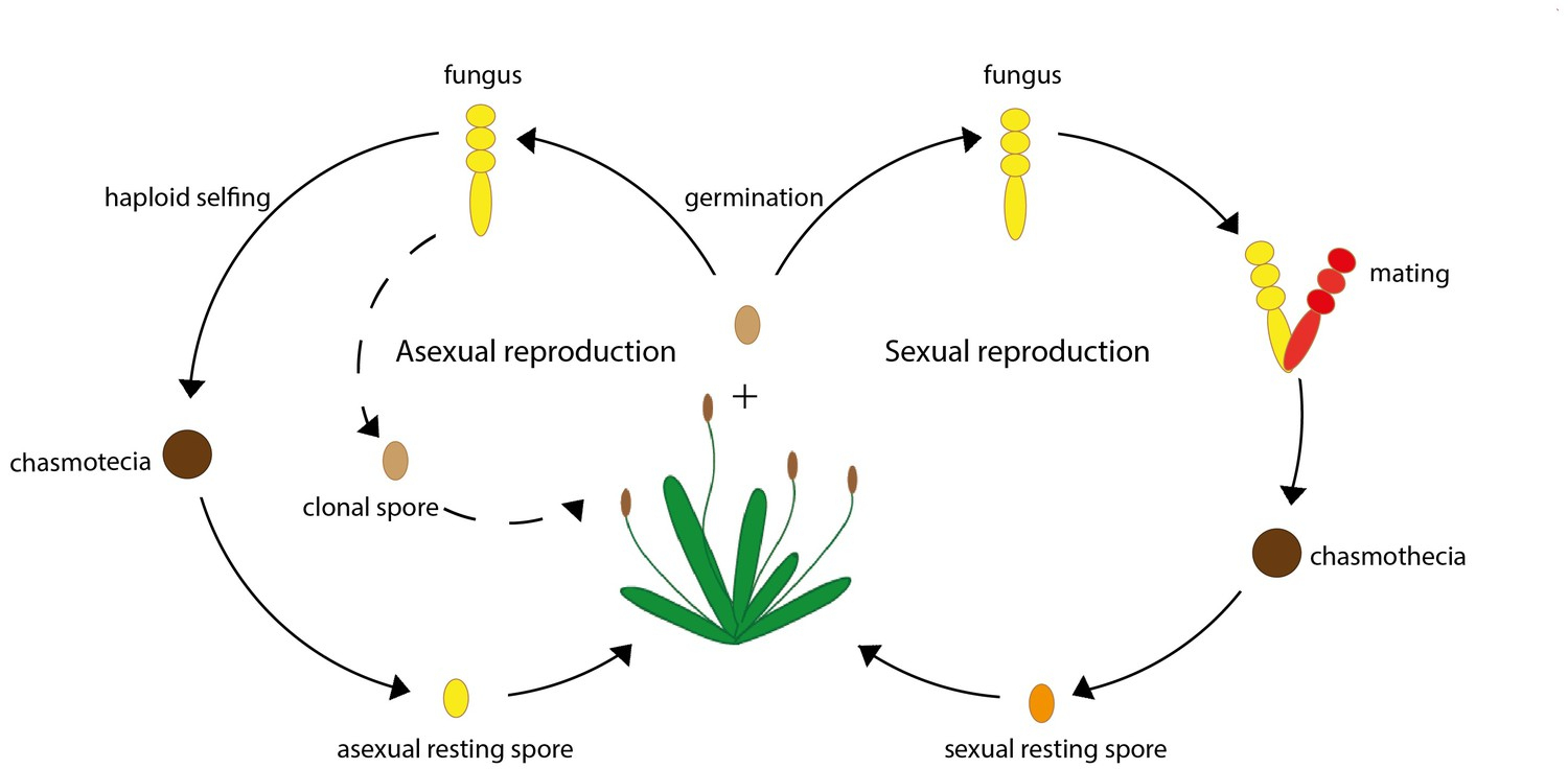 Figures And Data In Reproduction: Parasites Opt For The Best intérieur Reproduire Une Figure
