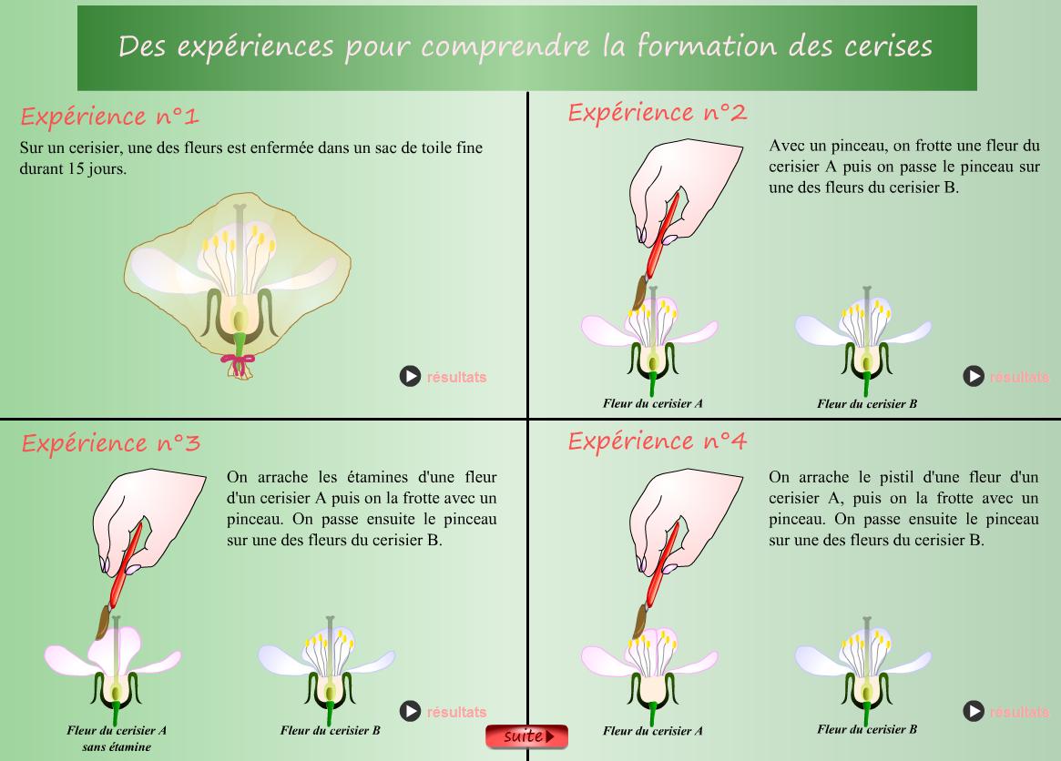 Fleur | Vive Les Svt ! serapportantà Schéma D Une Fleur
