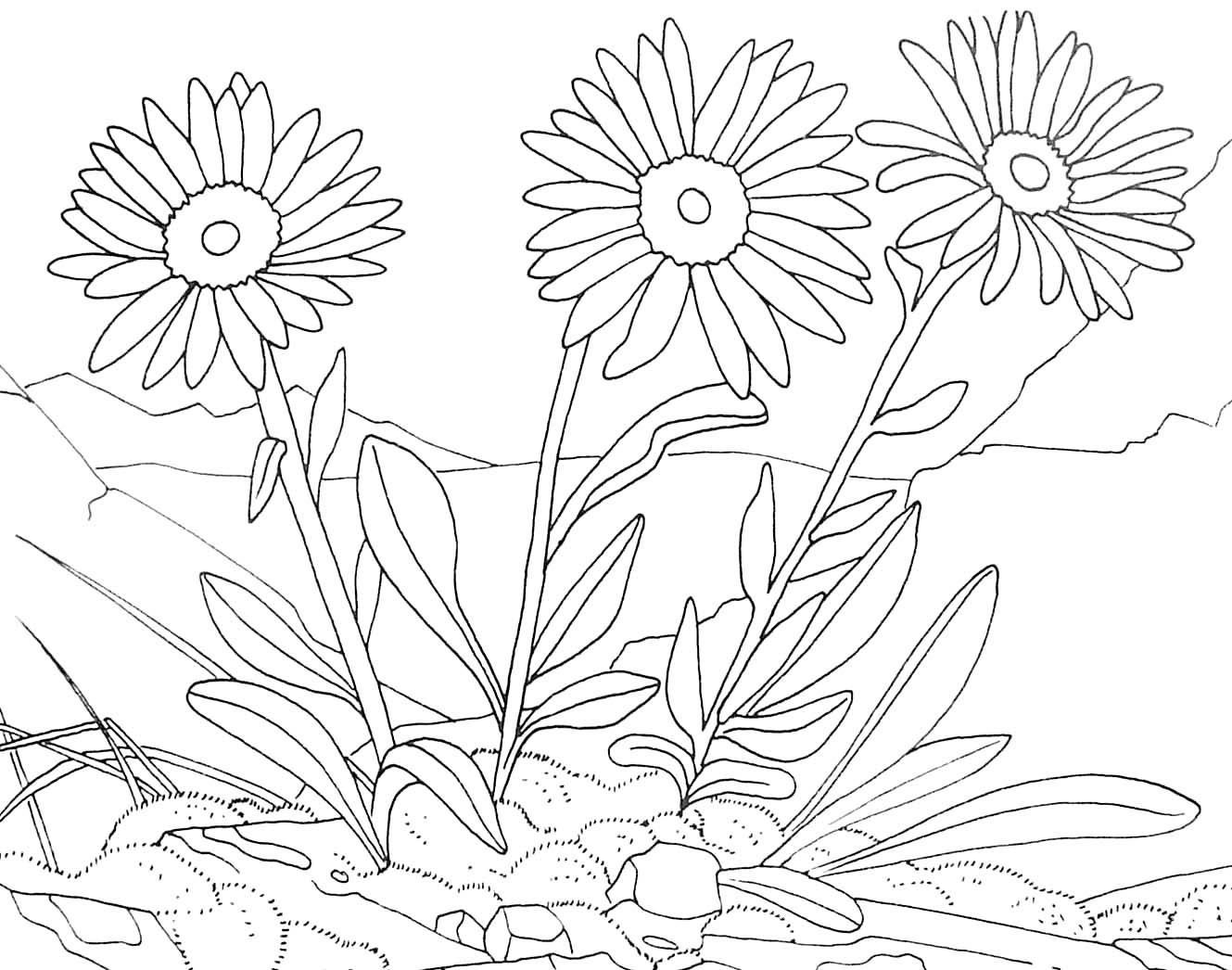 Fleurs #141 (Nature) – Coloriages À Imprimer intérieur Dessin A Colorier De Fleur