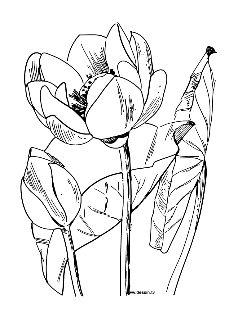 Fleurs #85 (Nature) – Coloriages À Imprimer intérieur Dessin A Colorier De Fleur