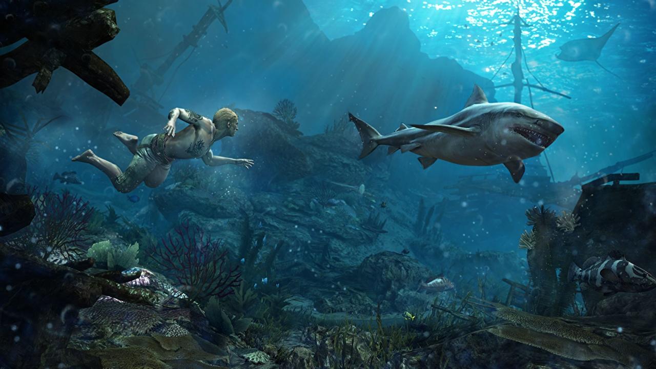 Fonds D'ecran Assassin's Creed Assassin's Creed 4 Black Flag concernant Requin Jeux Video