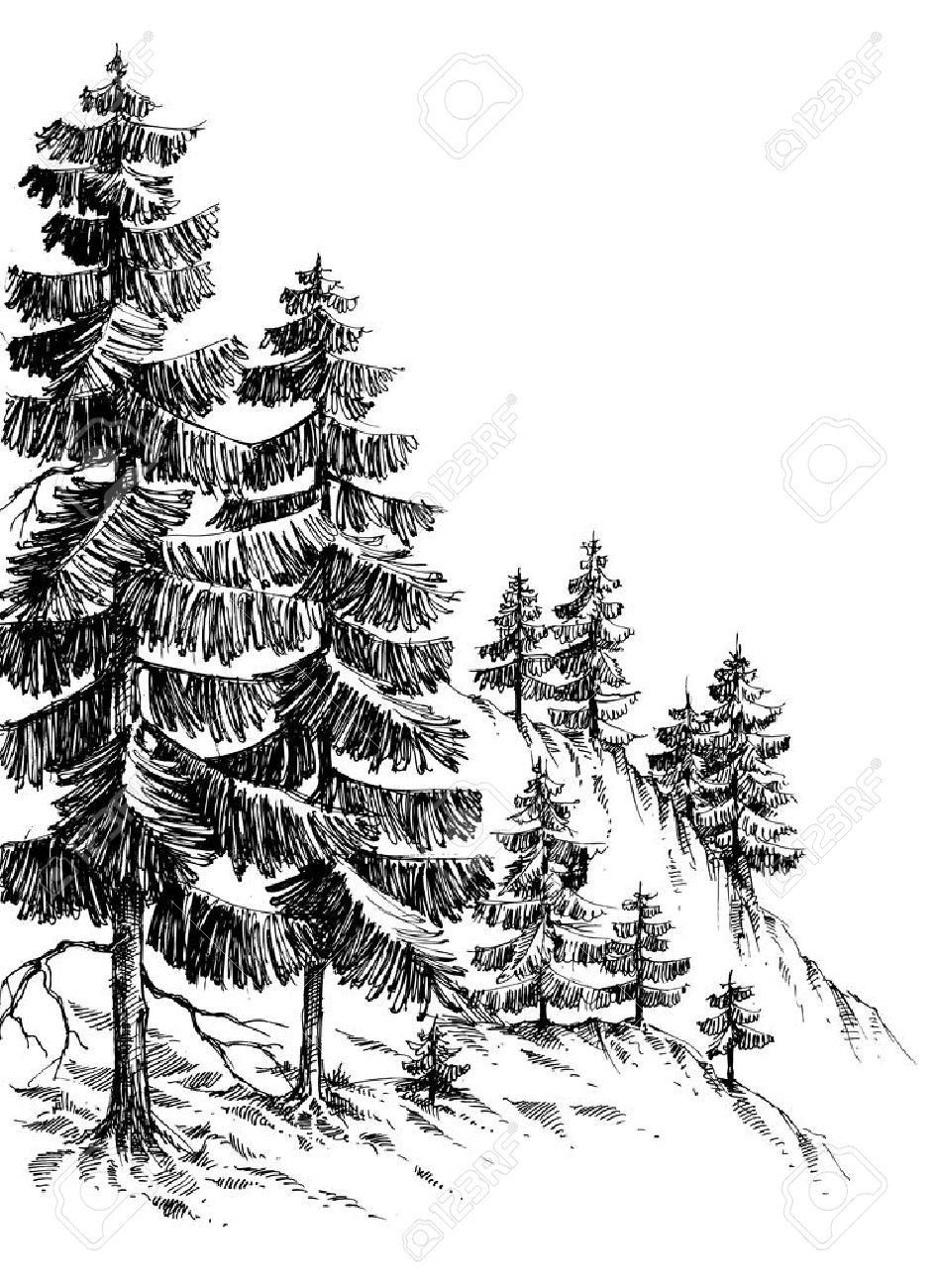 Forêt De Pins, Montagne D'hiver Paysage Dessin dedans Dessin De Foret
