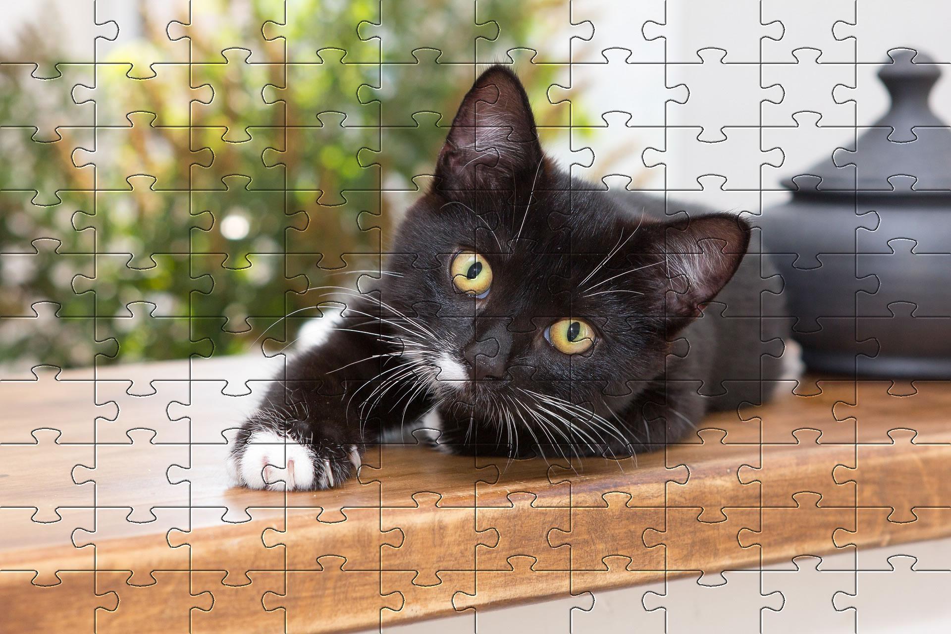 Free Jigsaw Puzzle Games - Online Jigsaw Puzzles | Puzzles avec Puzzle Photo Gratuit