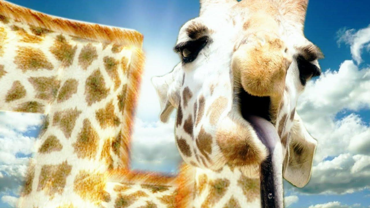 Girafe Senpai ! (Compilation De Jeux) avec Jeux De Girafe Gratuit