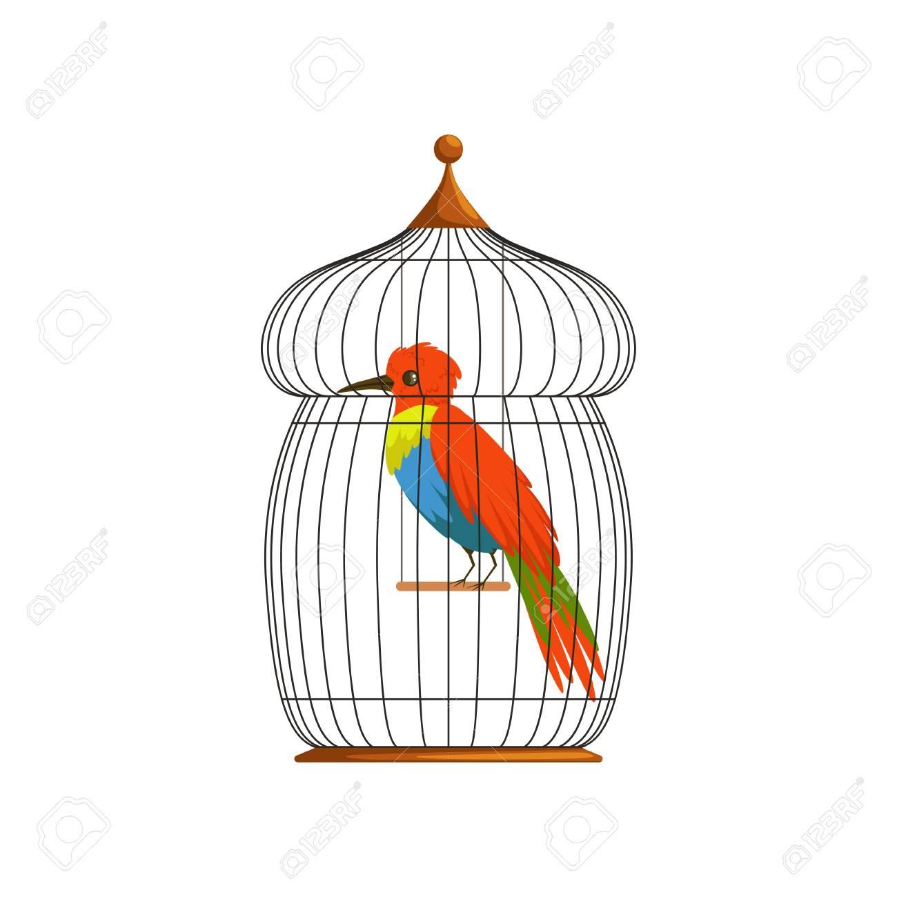 Grand Oiseau Avec De Longues Panaches Brillants Vert, Bleu Et Rouge.  Personnage De Dessin Animé D'un Animal Tropical Dans Une Vieille Cage  Métallique. dedans Dessin De Cage D Oiseau