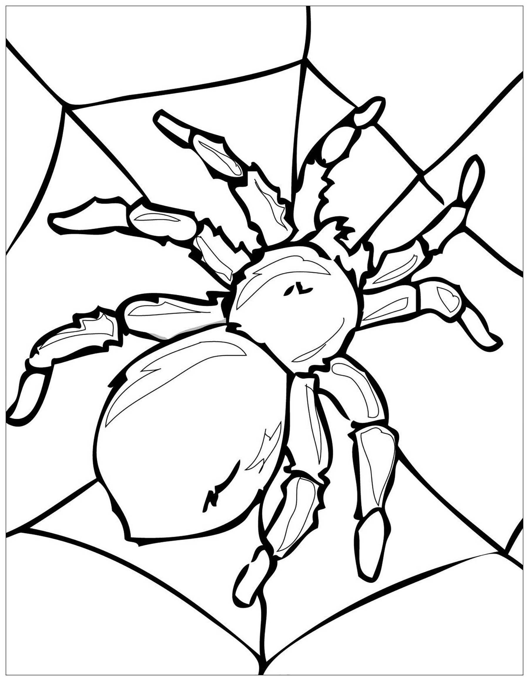 Grande Araignée - Papillons & Insectes - Coloriages encequiconcerne Dessin Toile Araignée