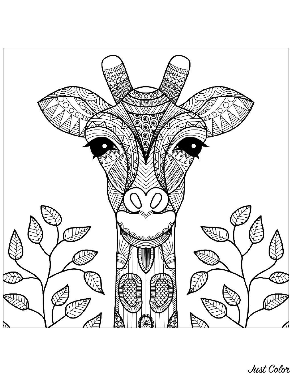 Gratuit Tete De Girafe Et Feuilles - Coloriage De Girafes intérieur Jeux De Girafe Gratuit