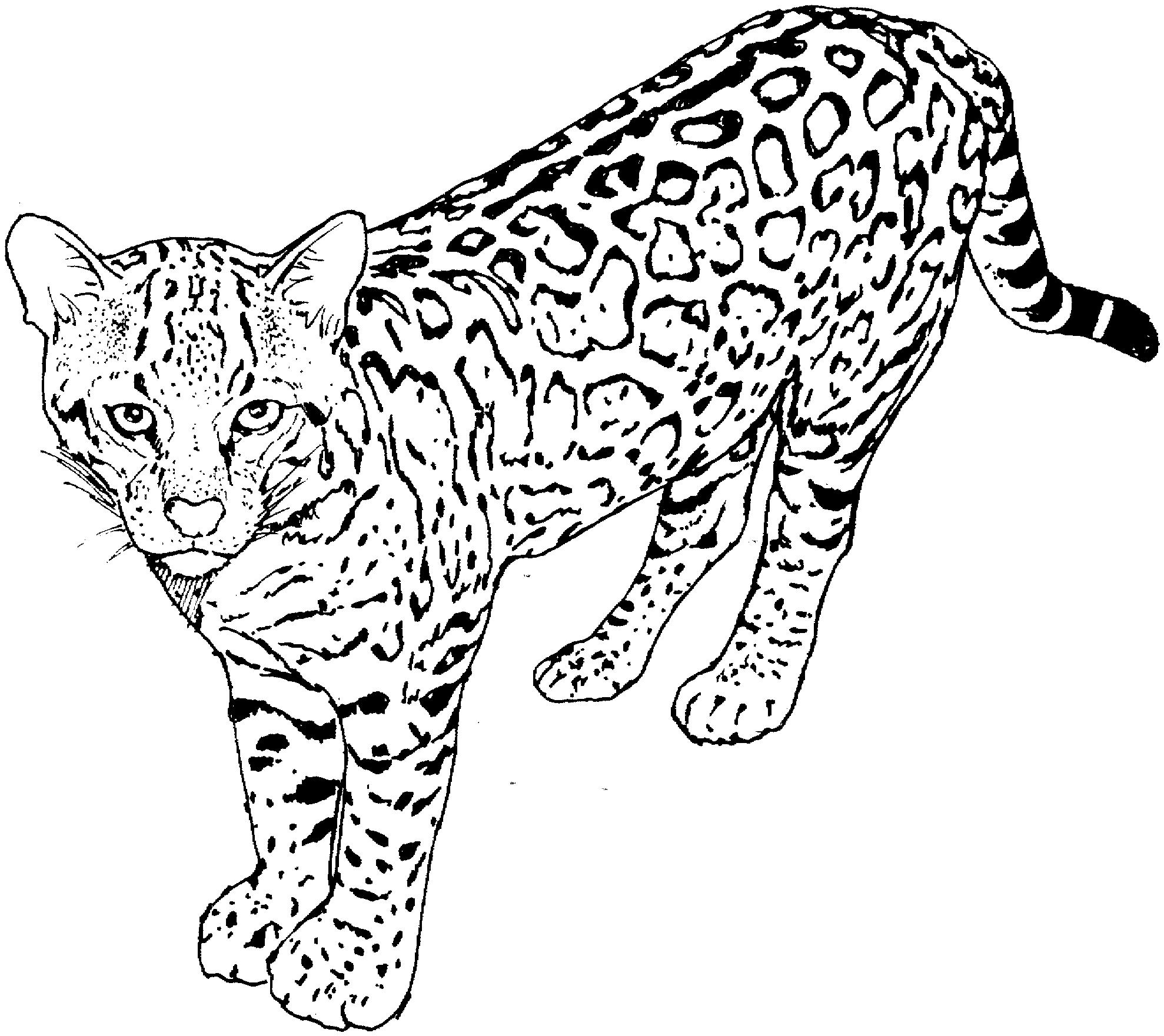 Guépard #34 (Animaux) – Coloriages À Imprimer intérieur Guépard Dessin