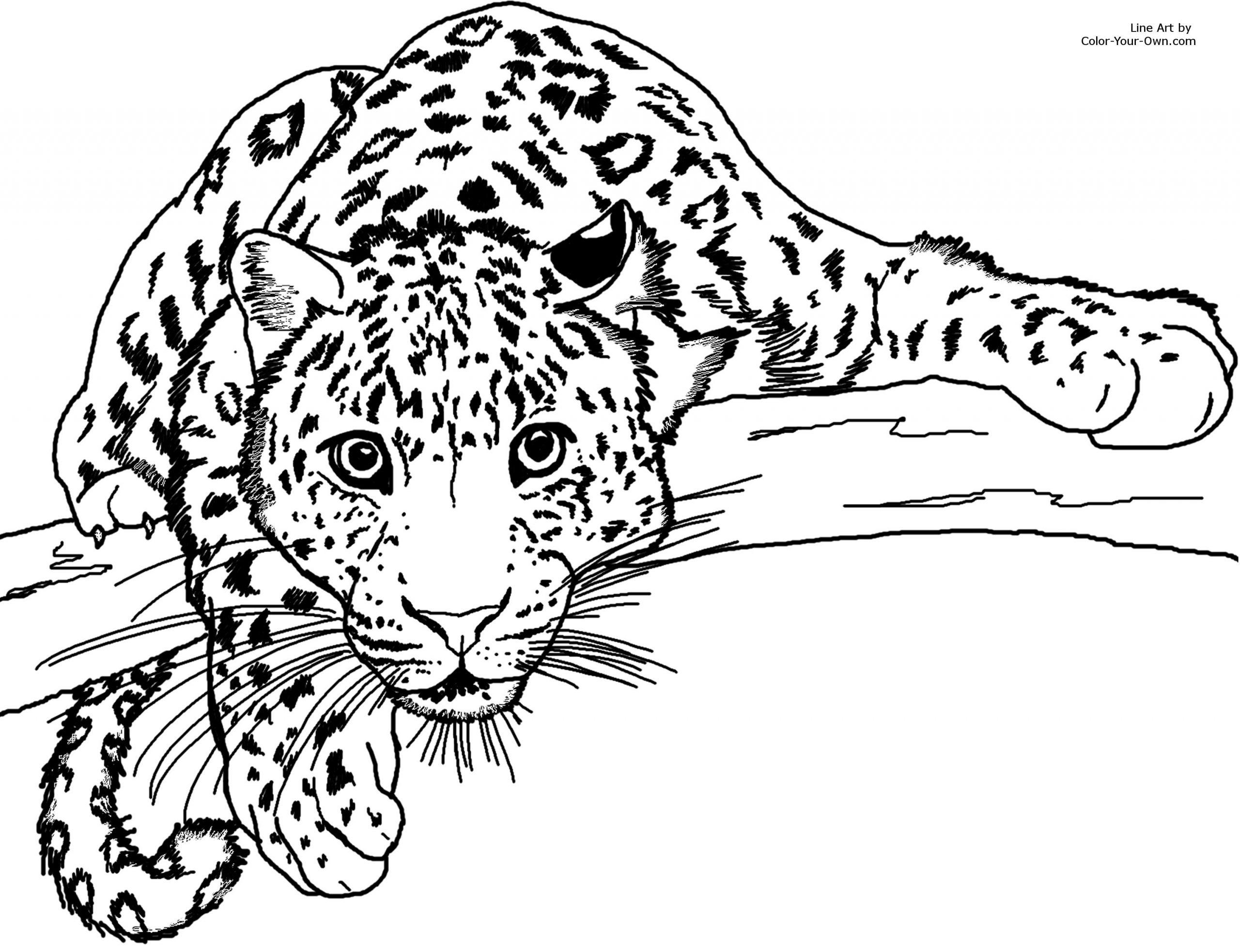 Guépard #5 (Animaux) – Coloriages À Imprimer concernant Animaux A Dessiner Imprimer