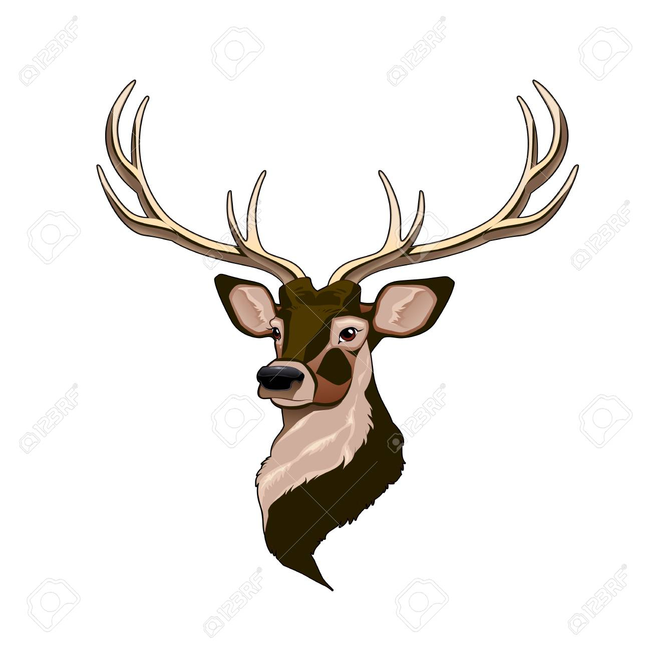 Head Of A Deer, Cartoon On A White Background.vector tout Caribou Dessin