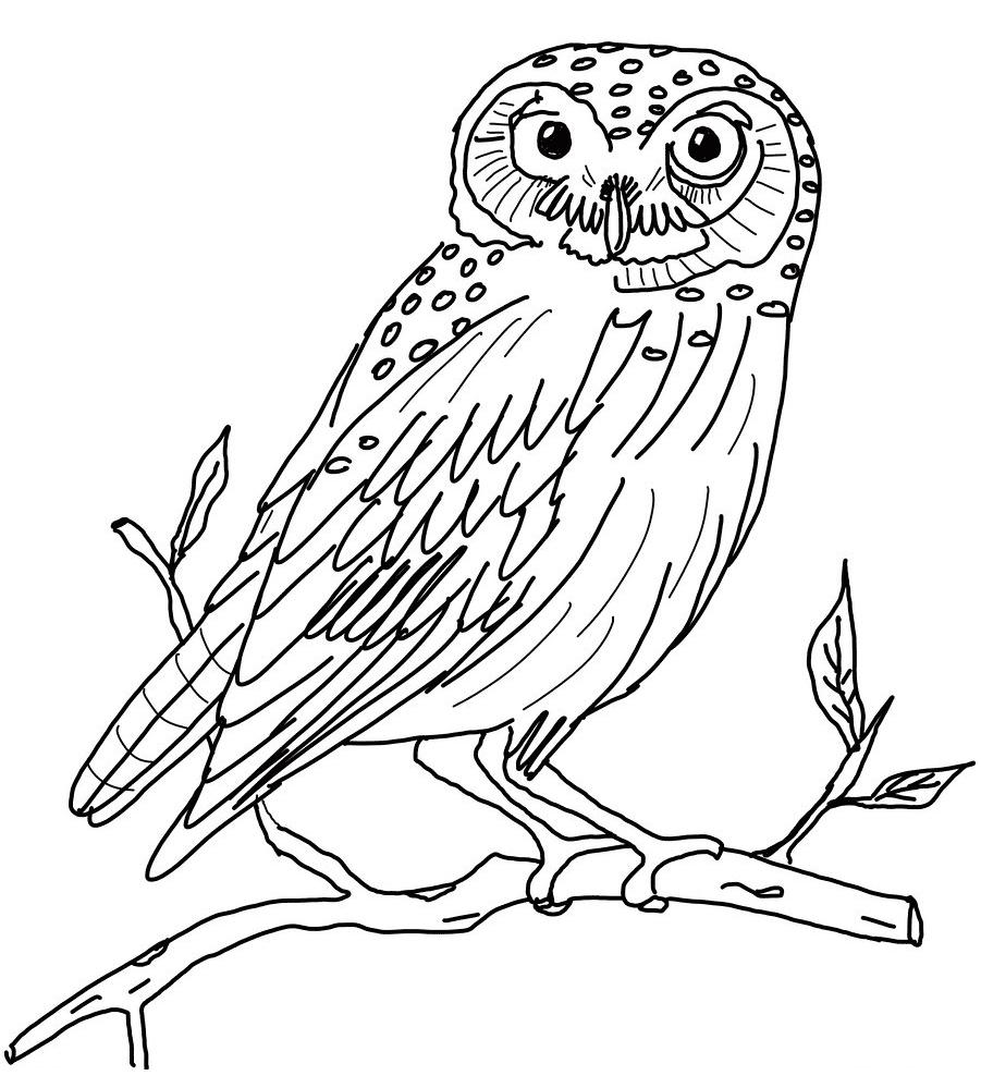 Hibou #1 (Animaux) – Coloriages À Imprimer serapportantà Hibou A Imprimer
