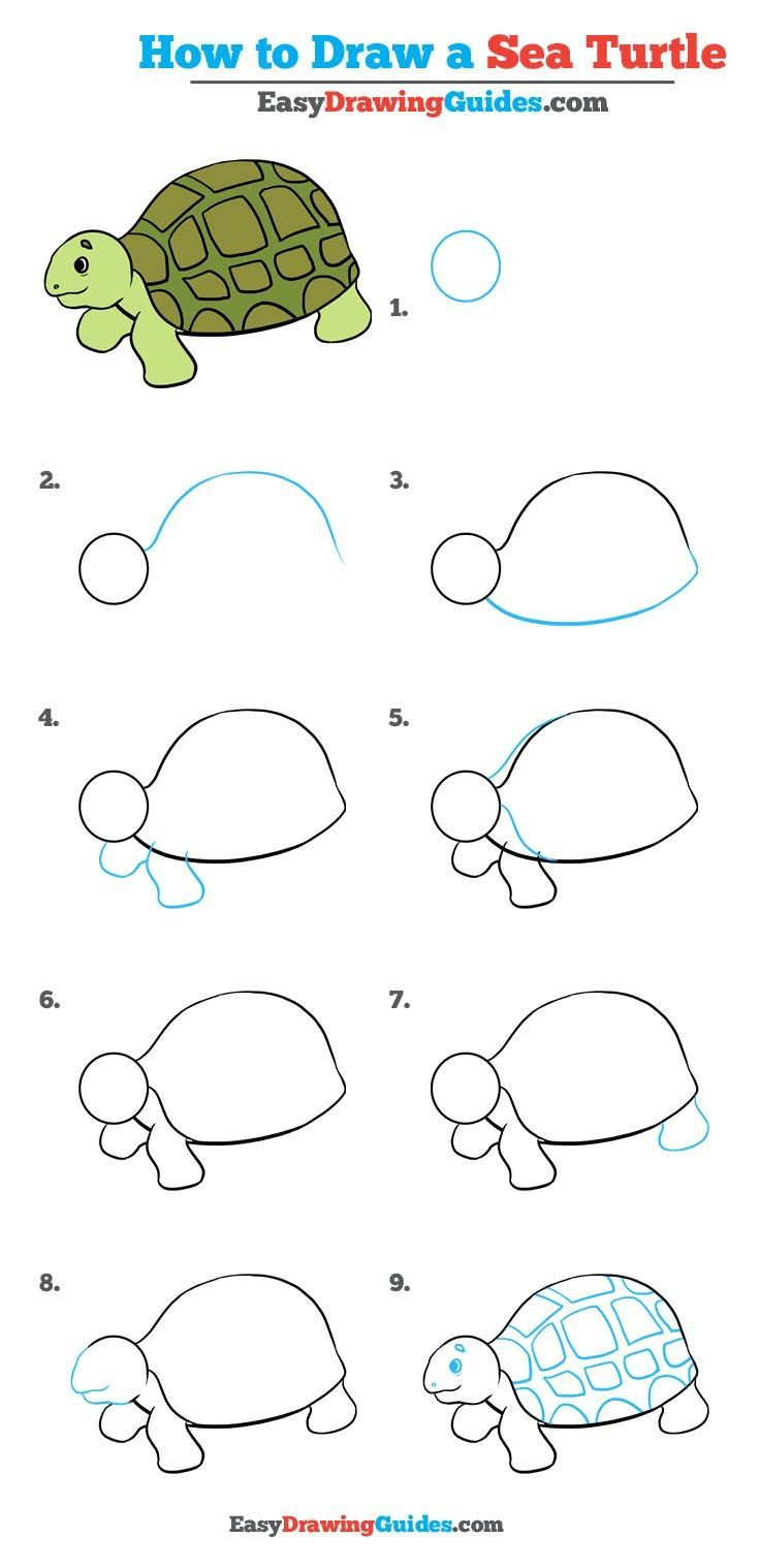 How To Draw A Sea Turtle - Really Easy Drawing Tutorial dedans Dessiner Une Tortue