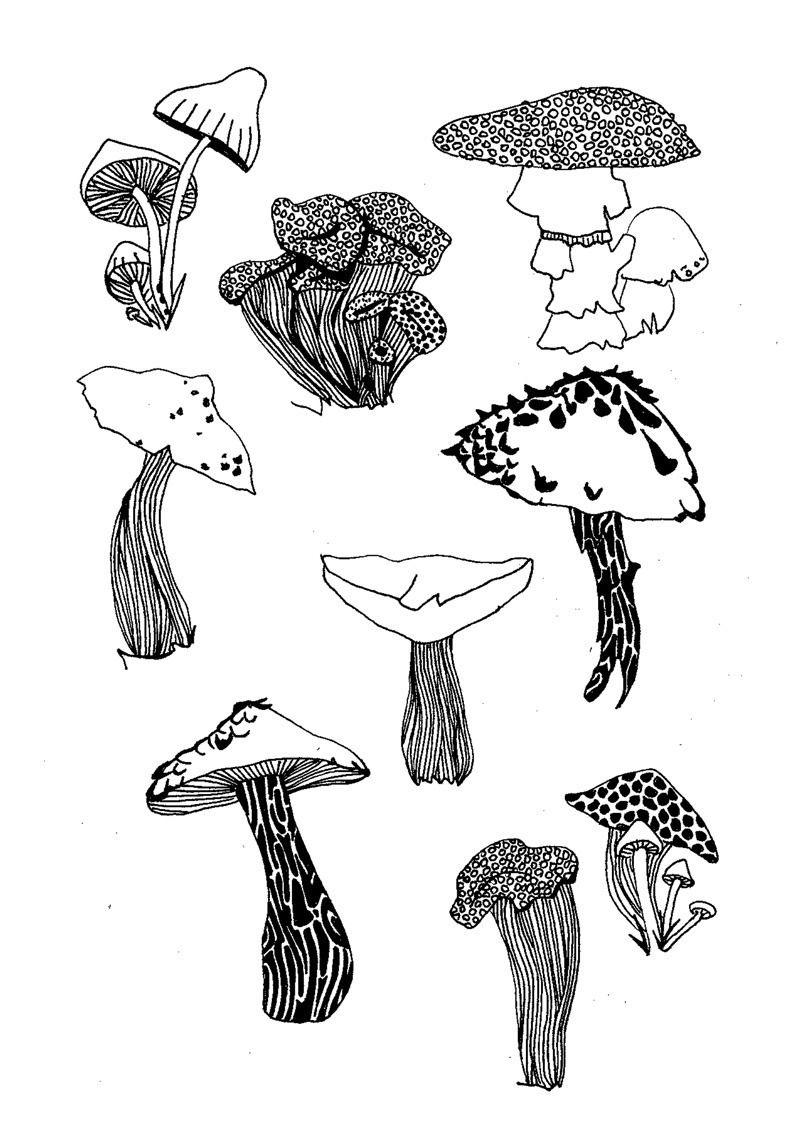 Illustration Affiche À Télécharger * Champignon* Forêt intérieur Dessiner Un Champignon