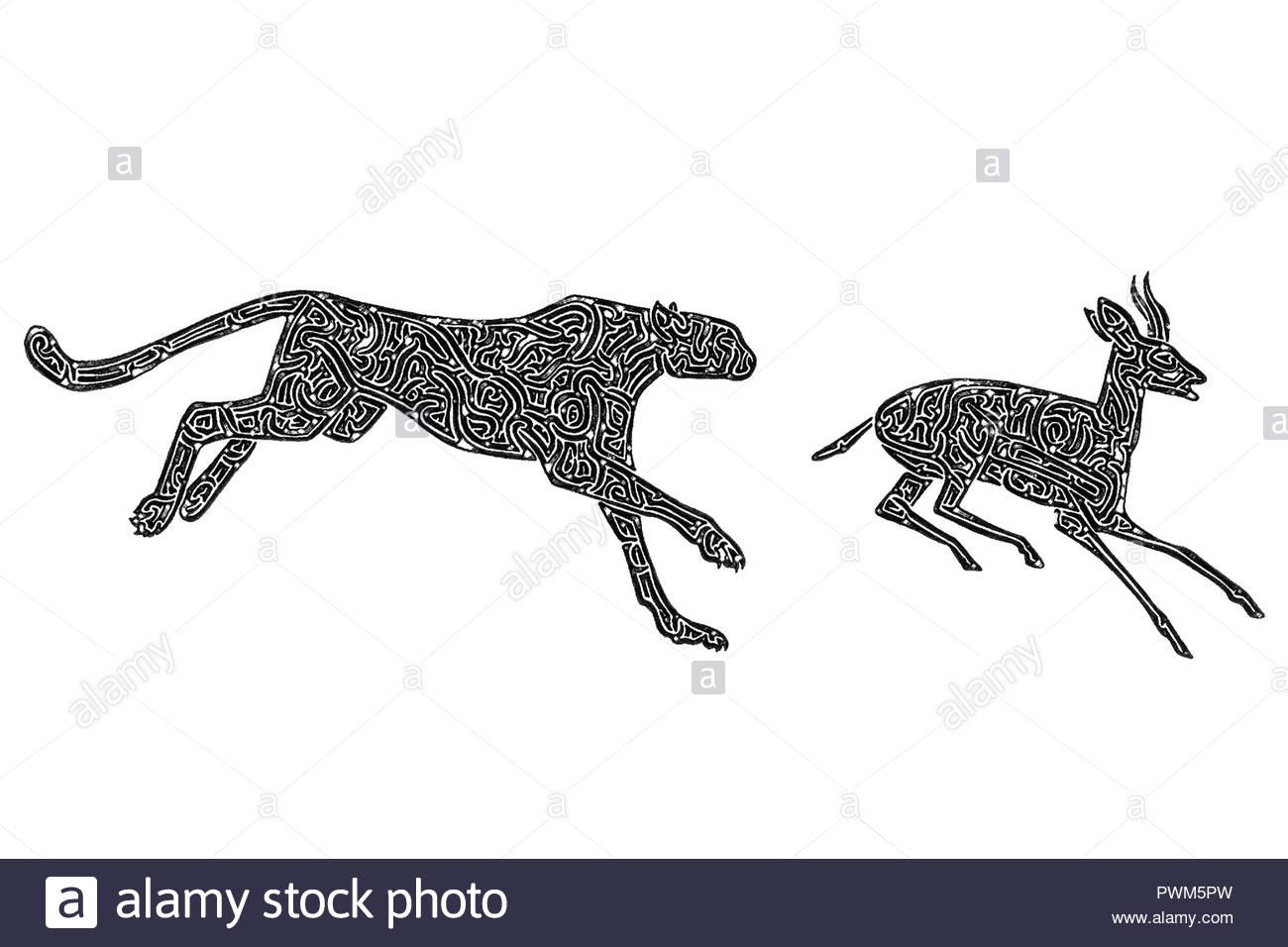 Illustration D'un Guépard Chasse Une Gazelle, Noir Et Blanc serapportantà Guépard Dessin