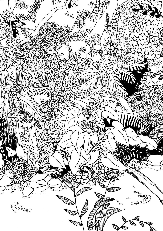"""Illustration Numérique À Télécharger """" Forêt Tropical dedans Dessin De Foret"""