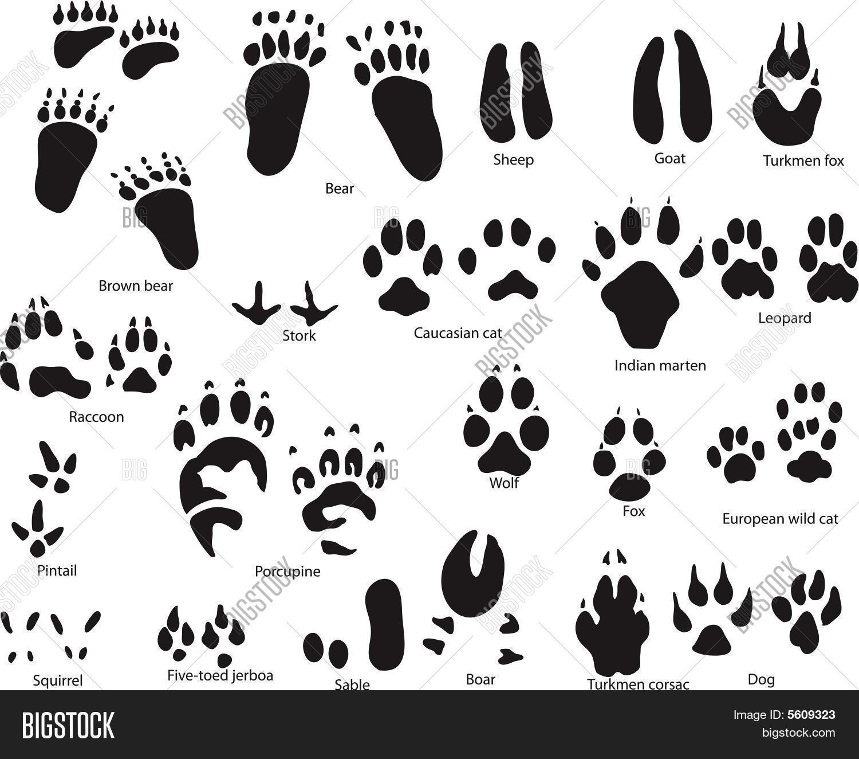 Image Vectorielle Et Photo De Jeu (Essai Gratuit) | Bigstock concernant Jeux D Animaux Gratuit