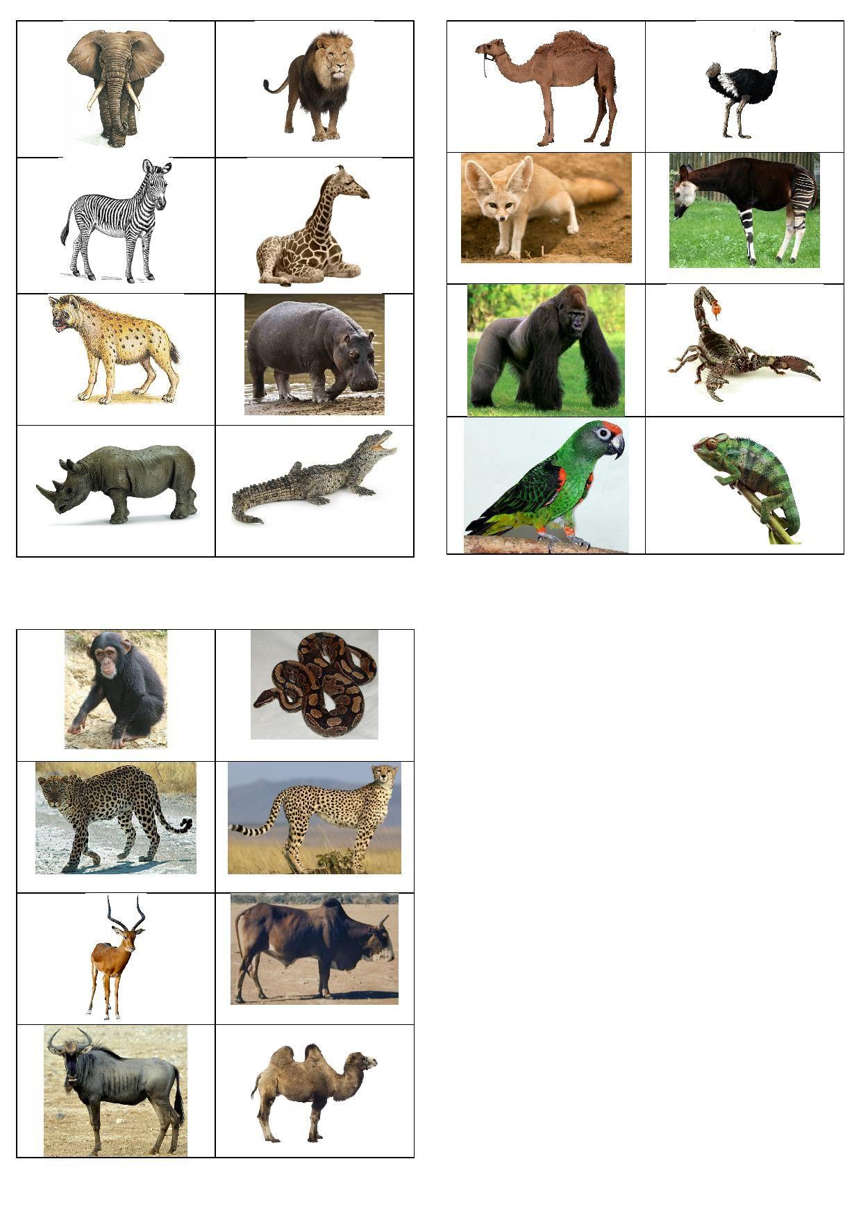 Imagiers | Imagier Animaux, Animaux Afrique Et Animaux Du Zoo concernant Les Animaux De L Afrique