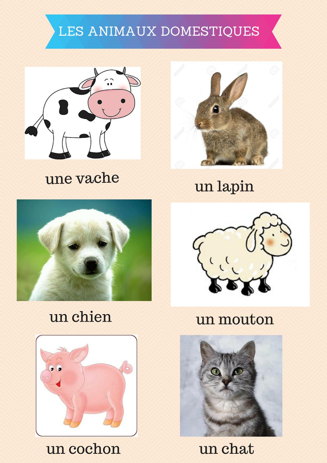 J'aime Le Français: Les Animaux Domestiques tout Les Animaux Domestiques En Maternelle