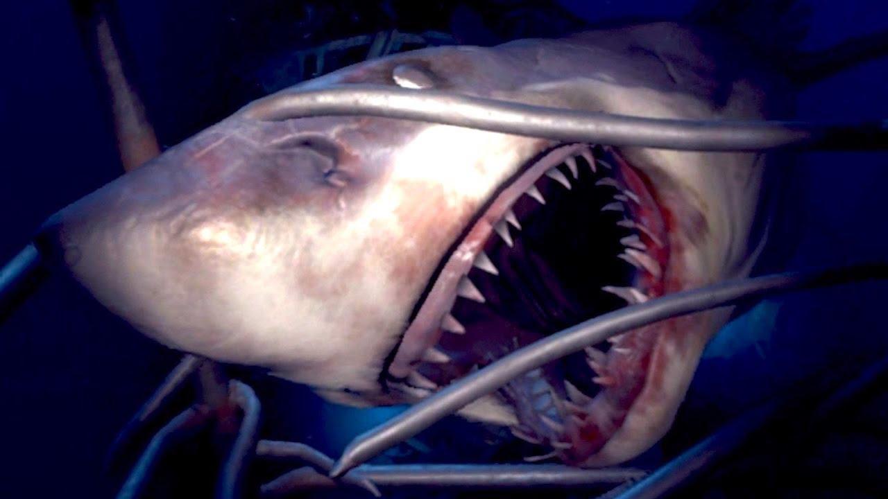 Je Me Suis Fait Attaquer Par Un Requin ! à Requin Jeux Video