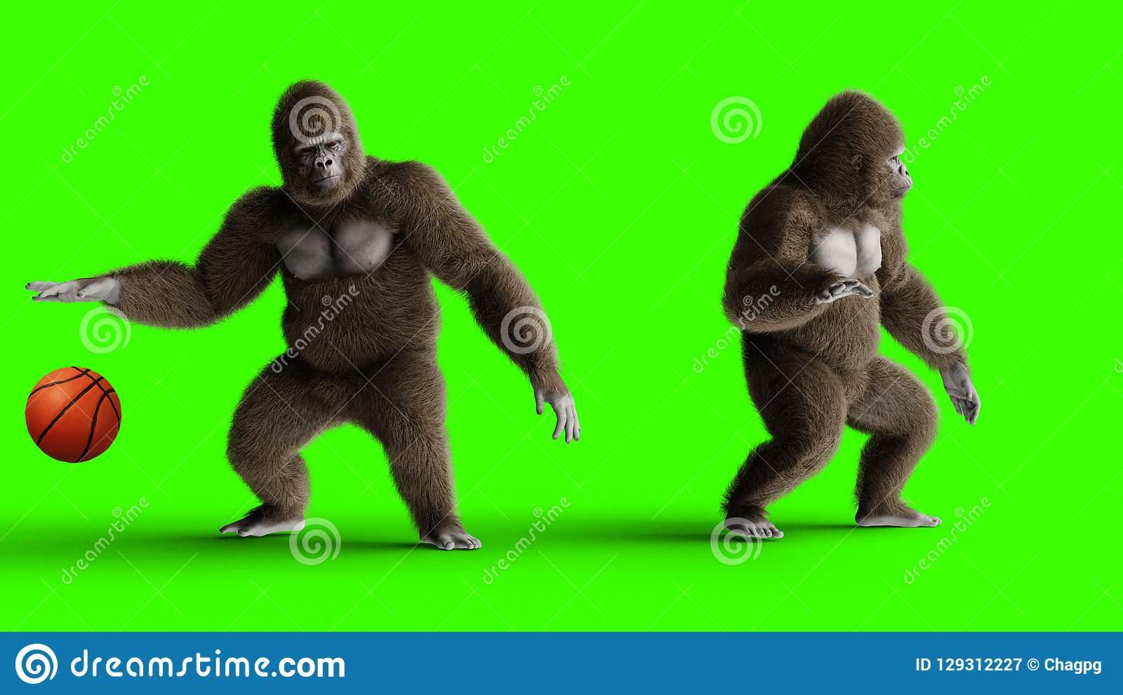 Jeu Brun Drôle De Gorille Au Basket-Ball Fourrure Et Cheveux dedans Jeux De Gorille Gratuit