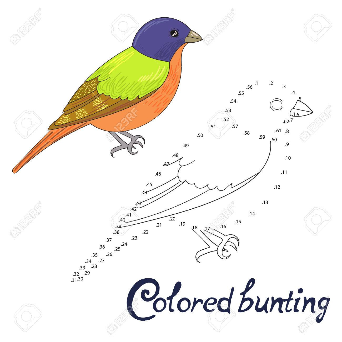 Jeu Éducatif Relier Les Points Pour Dessiner Le Bruant De Couleur Doodle De  Bande Dessinée D'oiseau Main Illustration Vectorielle Dessinée serapportantà Relier Les Points De 1 À 30