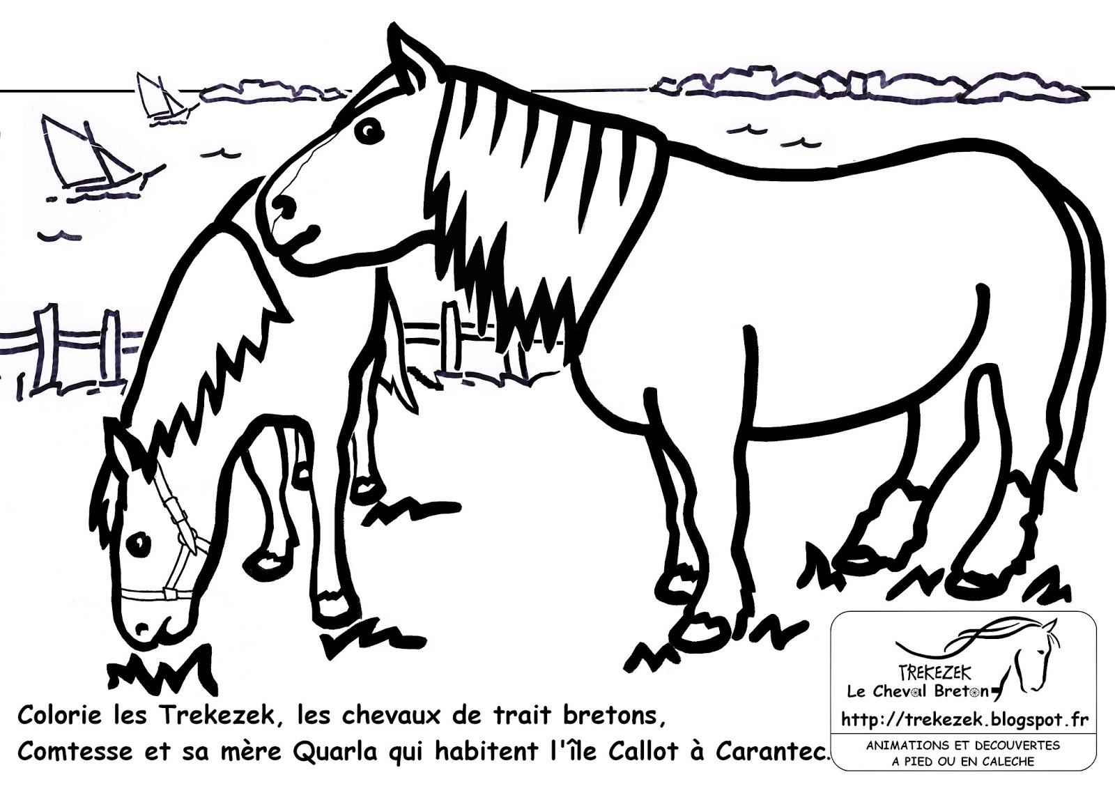 Jeux De Coloriage De Chevaux | Liberate destiné Jeux De Coloriage De Cheval