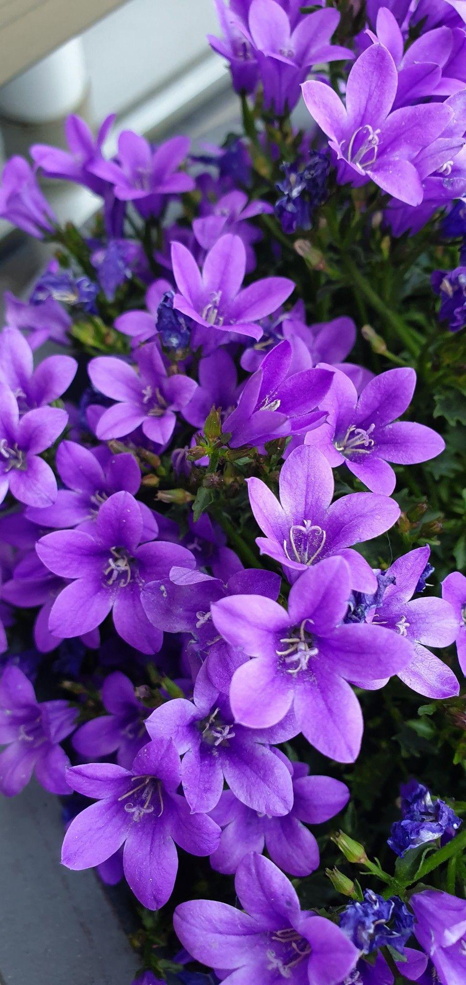 Kir Cicekleri | Egzotik Çiçekler, Çiçek, Çiçek Bahçesi serapportantà Anémone Des Mers