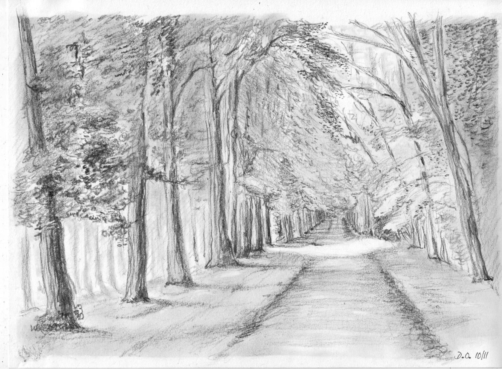 La Forêt avec Dessin De Foret
