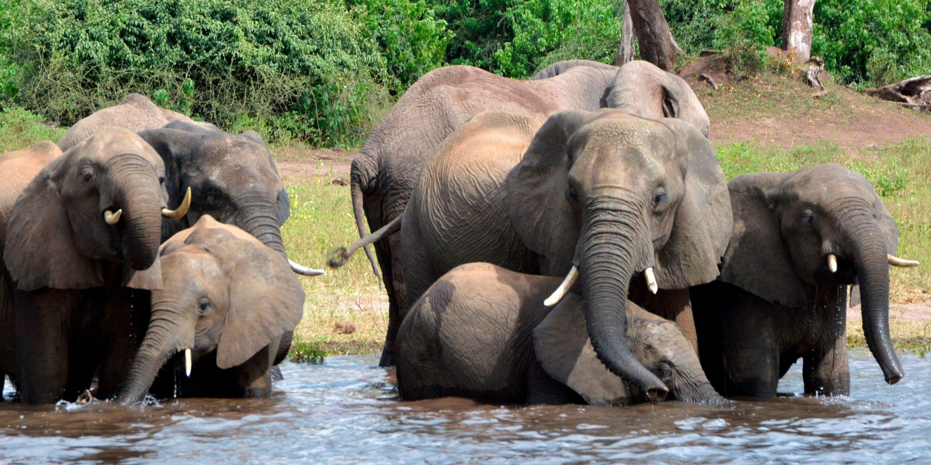 La Sécheresse Menace Des Milliers D'animaux Dans Le Sud De L tout Les Animaux De L Afrique