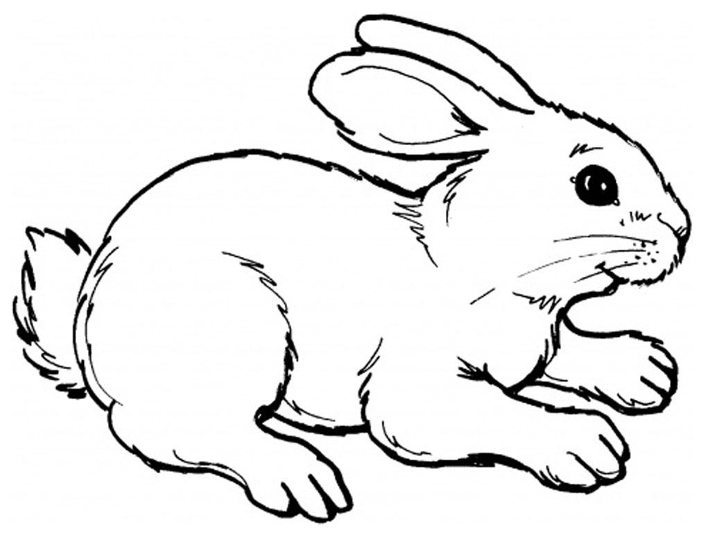 Lapin #8 (Animaux) – Coloriages À Imprimer encequiconcerne Dessin De Lapin A Imprimer